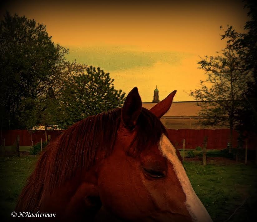 Tussen de oren van het paard, merk je de kerktoren... by nelly.haelterman