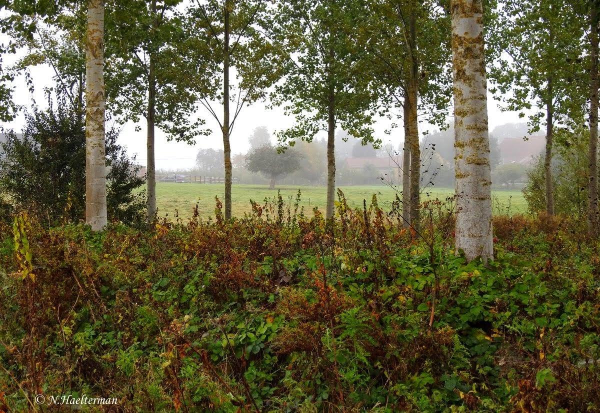 Tussen de bomen kijken... by nelly.haelterman