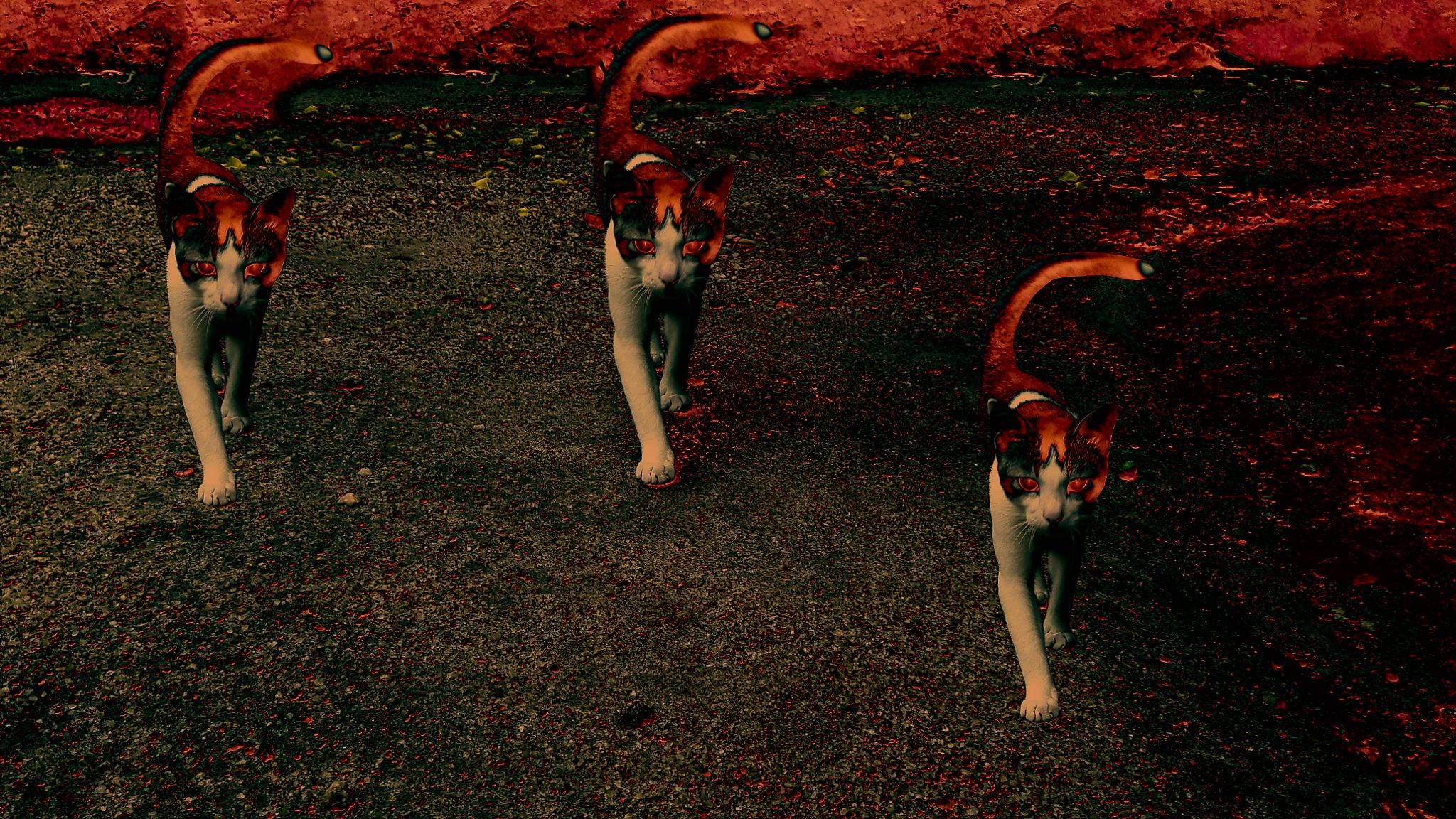 ghost kitties by buddhika ranchagoda