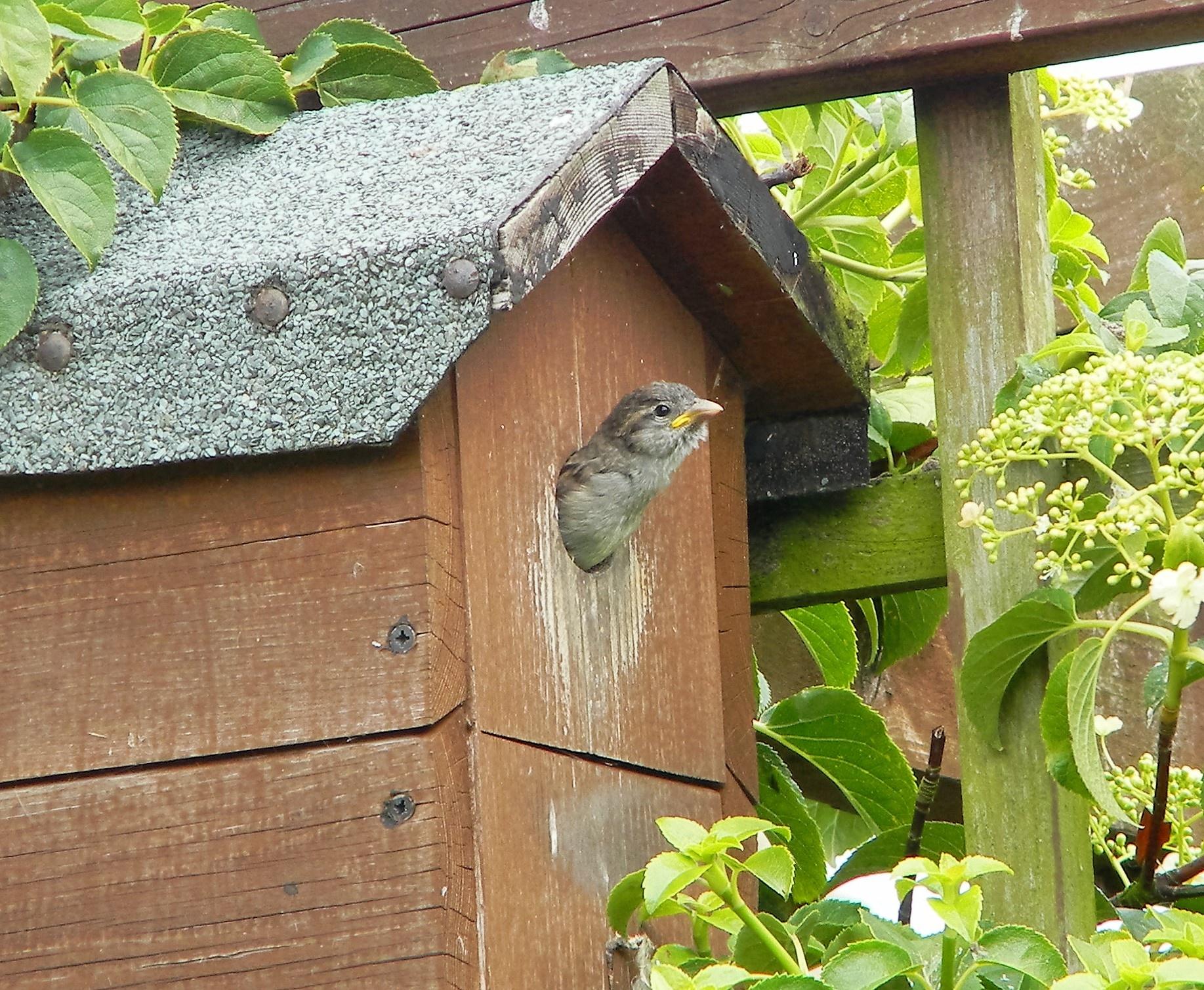 Baby Sparrow by Geraldine Cave