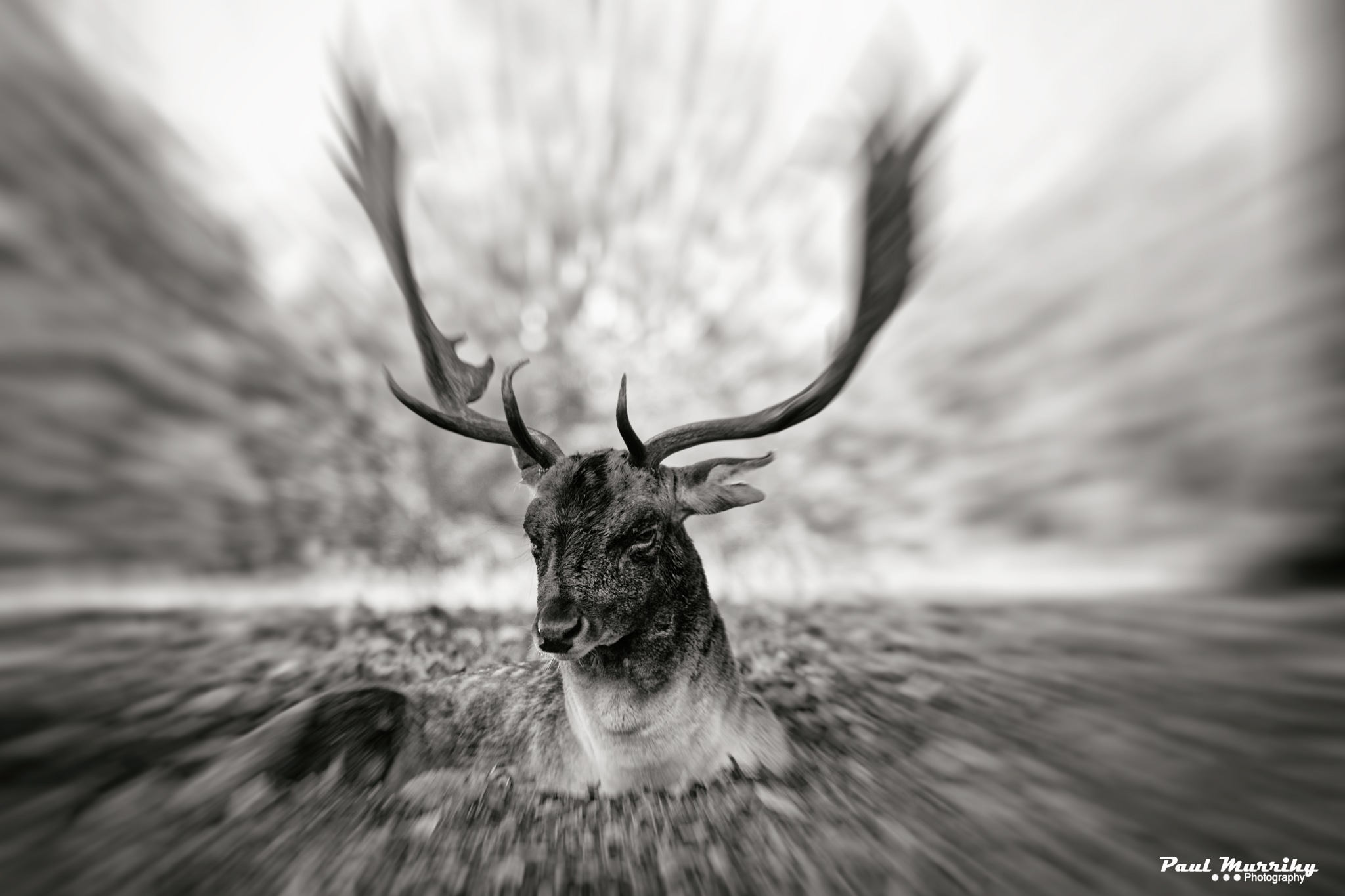 Pulled venison..... by paul.murrihy.5