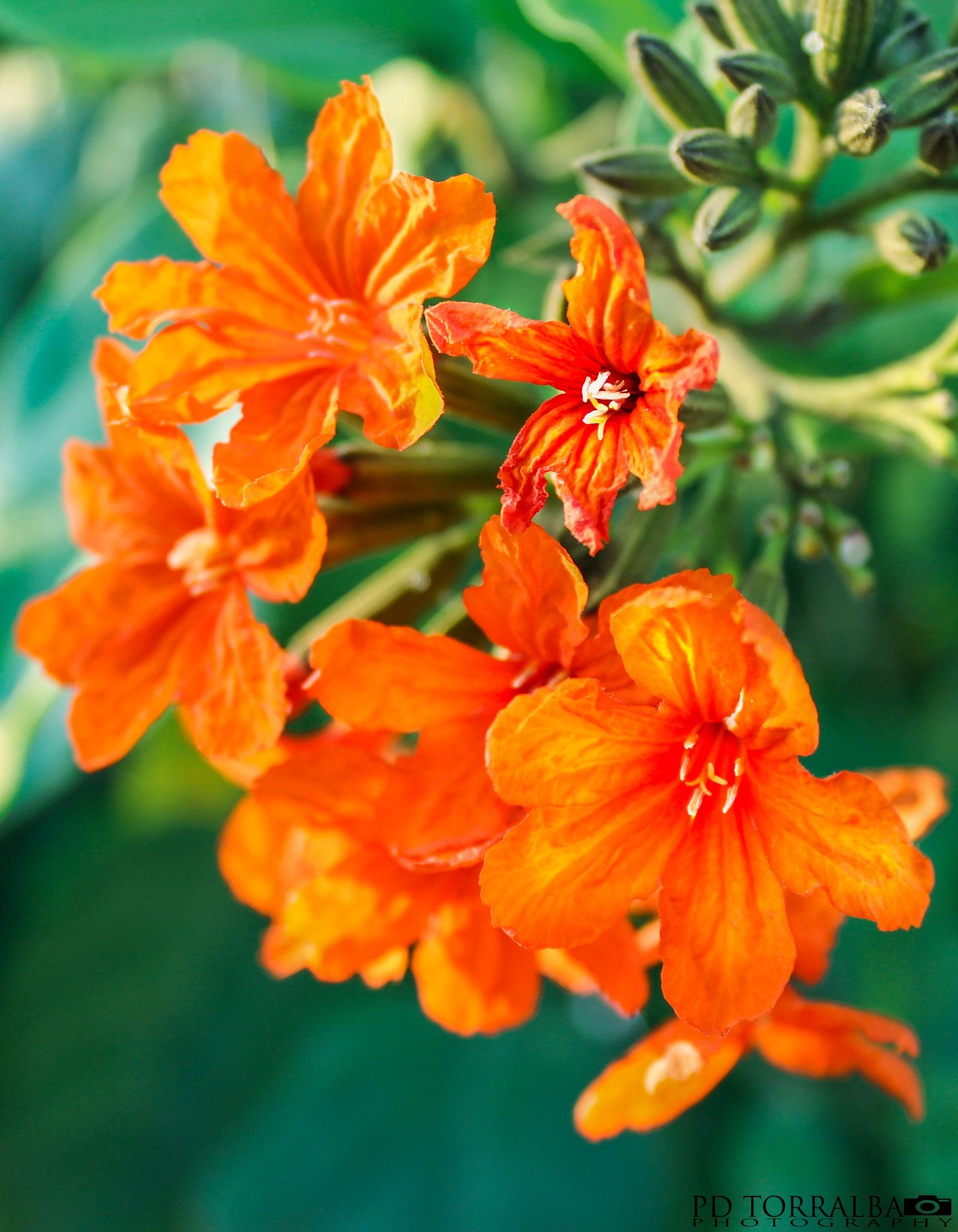 flower by ptorralba08