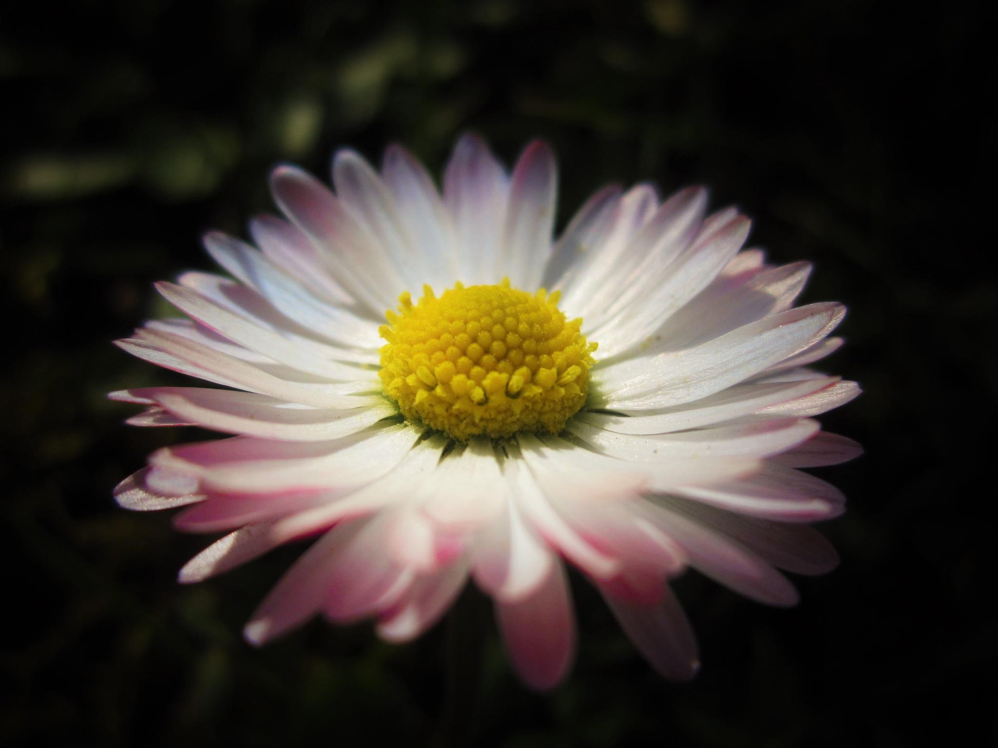 From aunt's garden by Marija Konjik