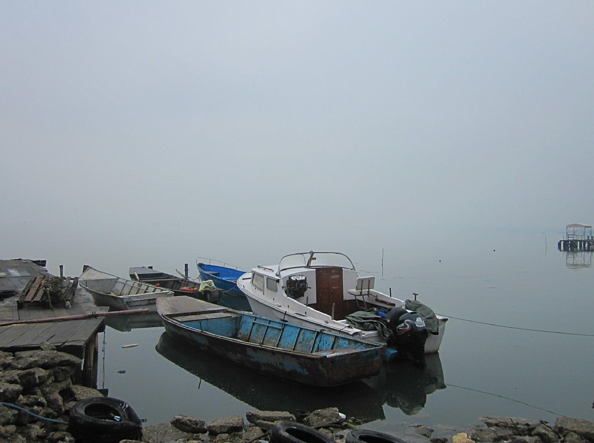 One usual misty day on the Danube by Marija Konjik