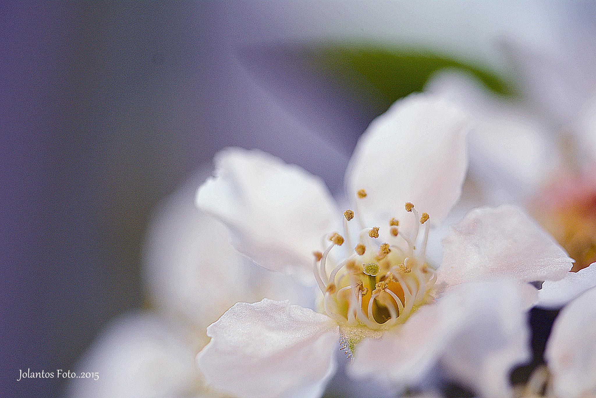 Photo in Macro #nature #macro