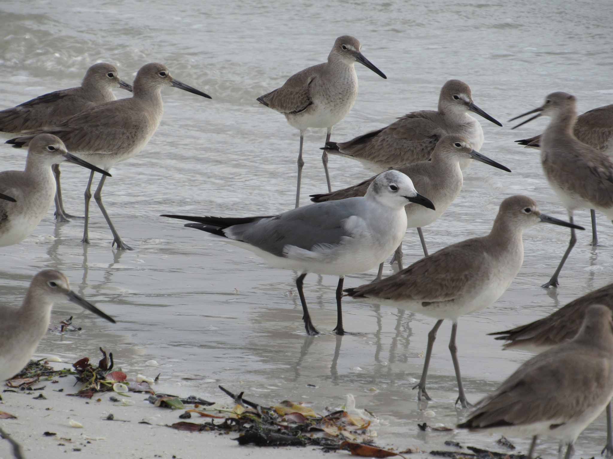 I'm a Willet ... Really by Todd