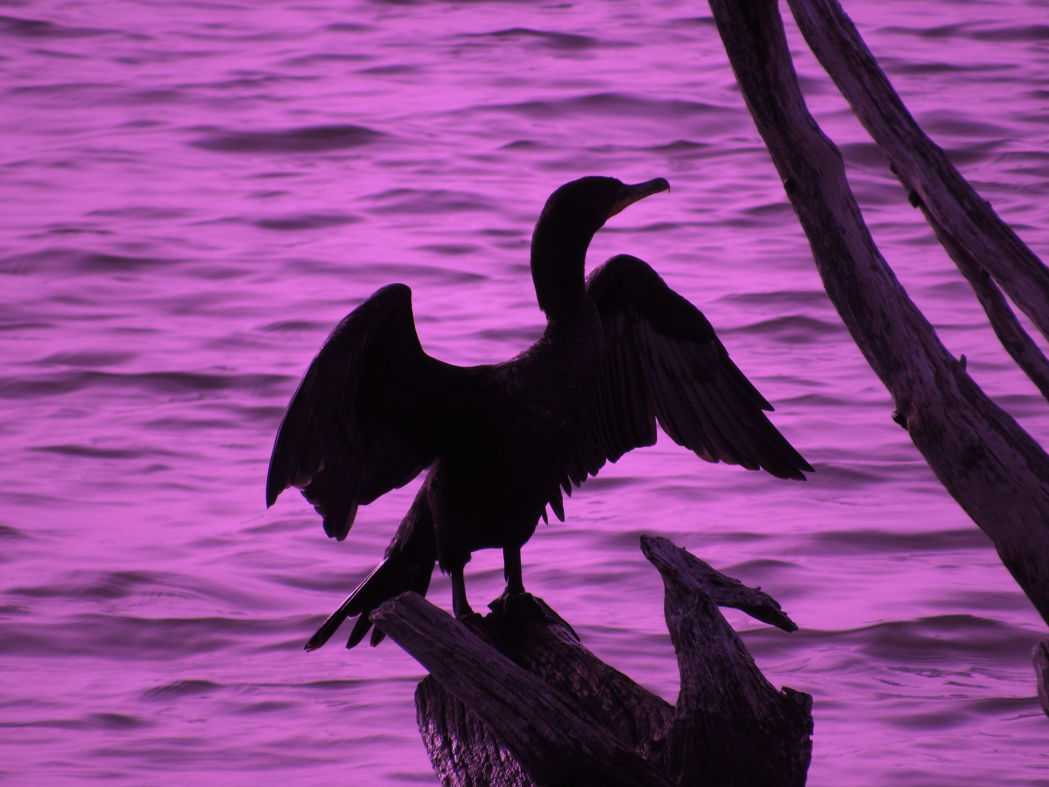 Photo in Nature #cormorant #florida #state park #lovers key #igotone.com