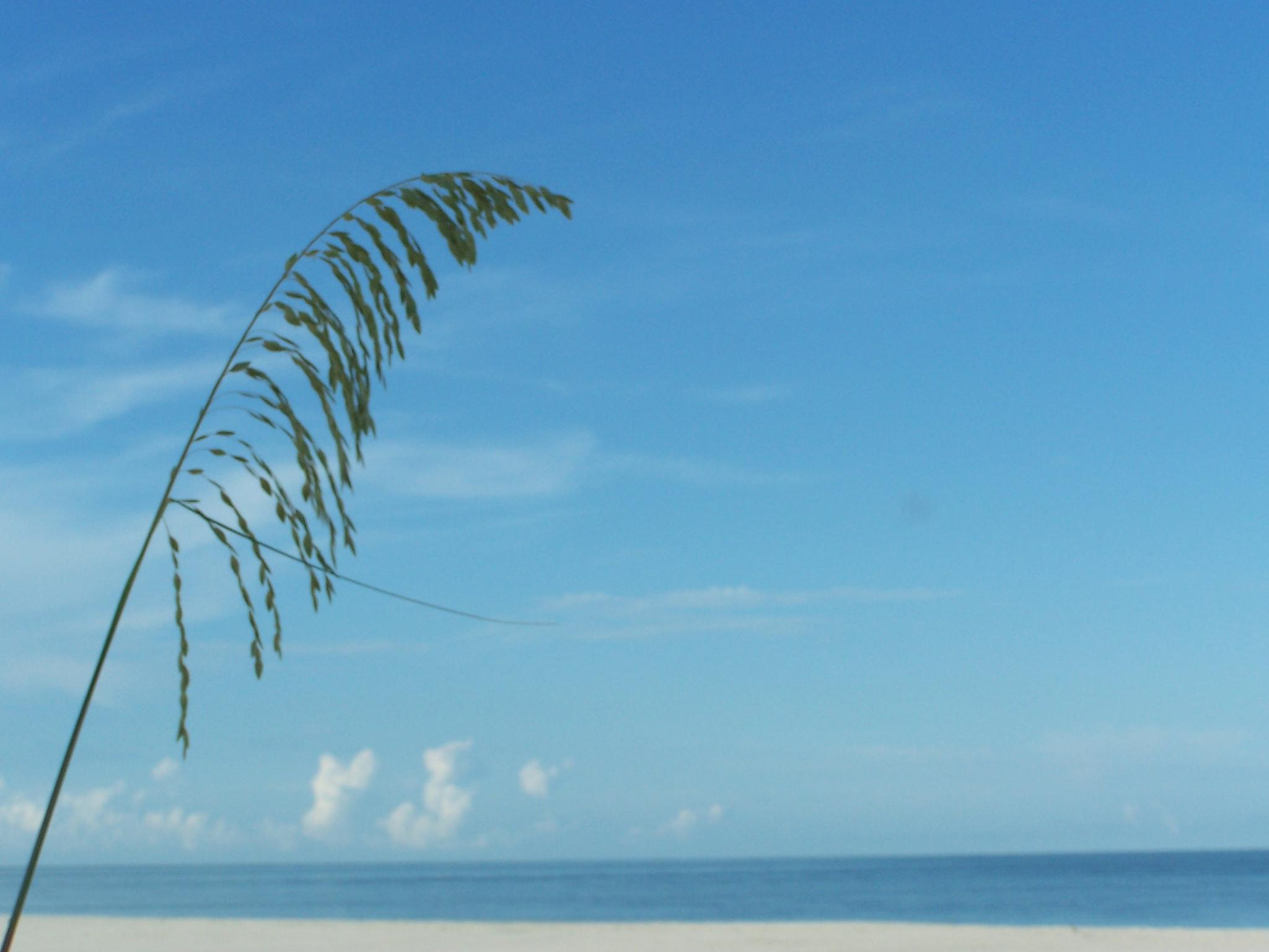 Sea Oat and the Sky by Todd