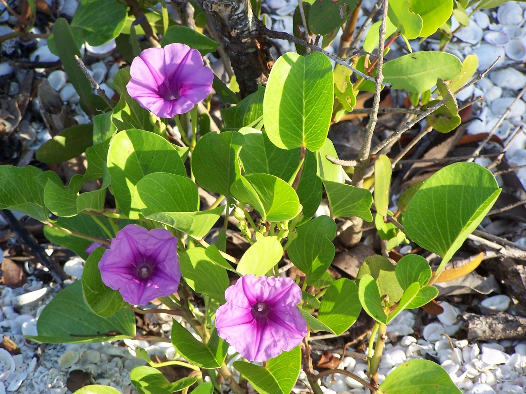 Flowers of the Beach by Todd