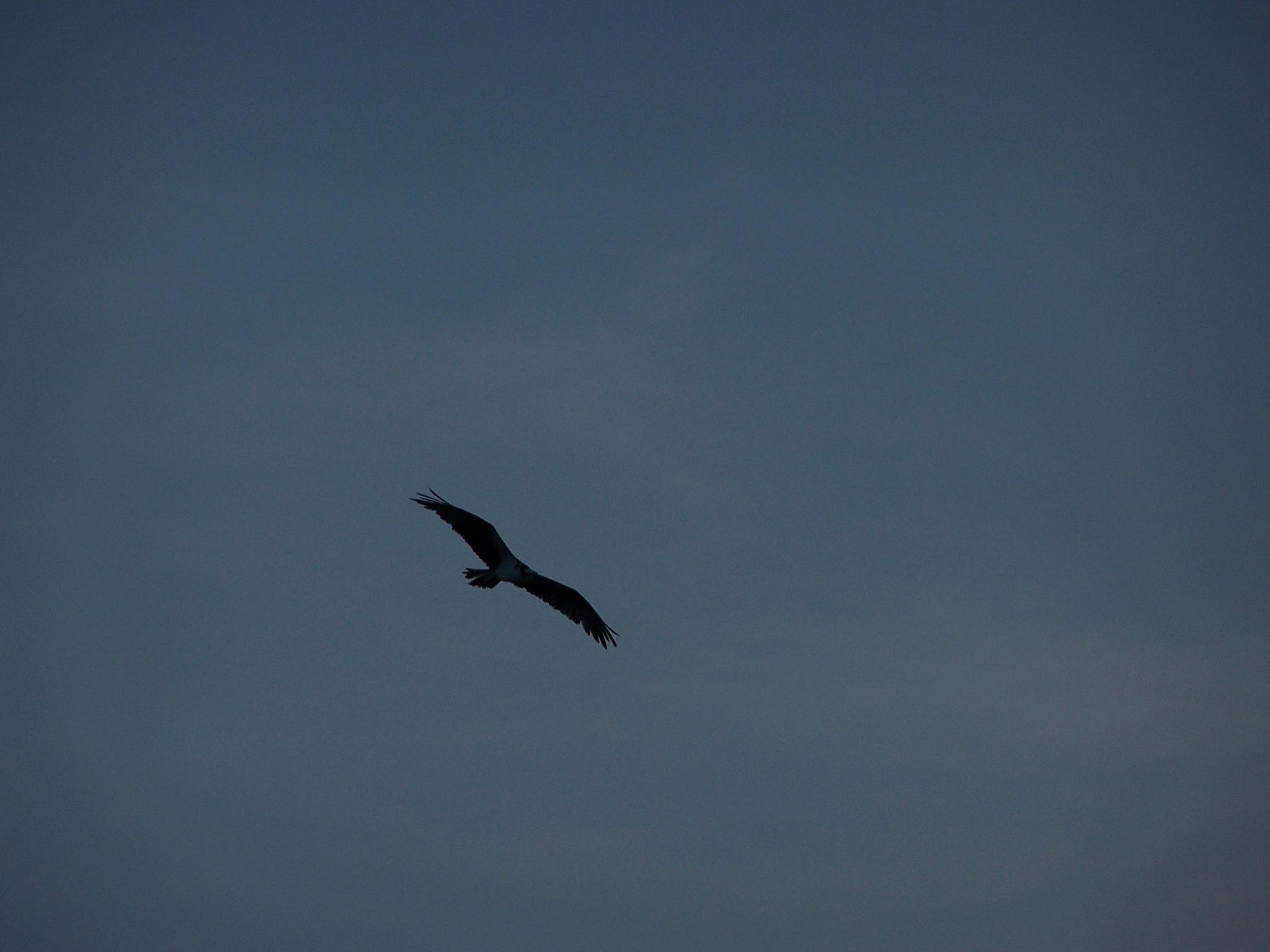 Photo in Random #osprey #state park #florida #united states #lovers key