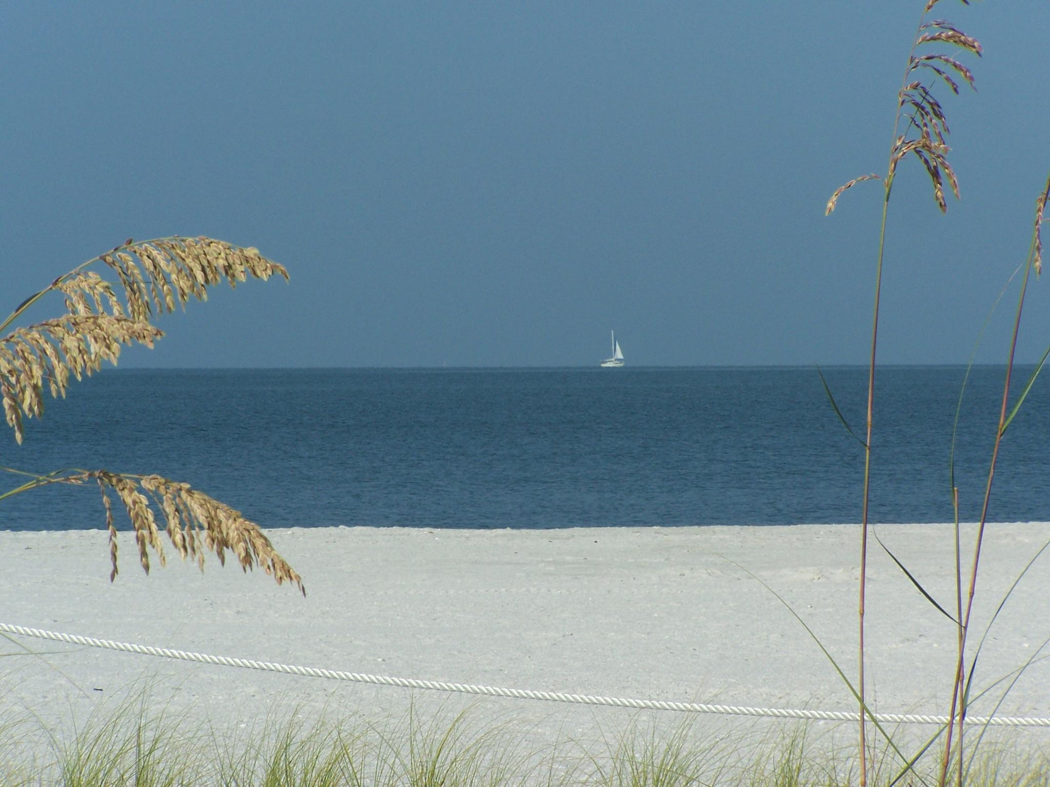 Sail Away by Todd