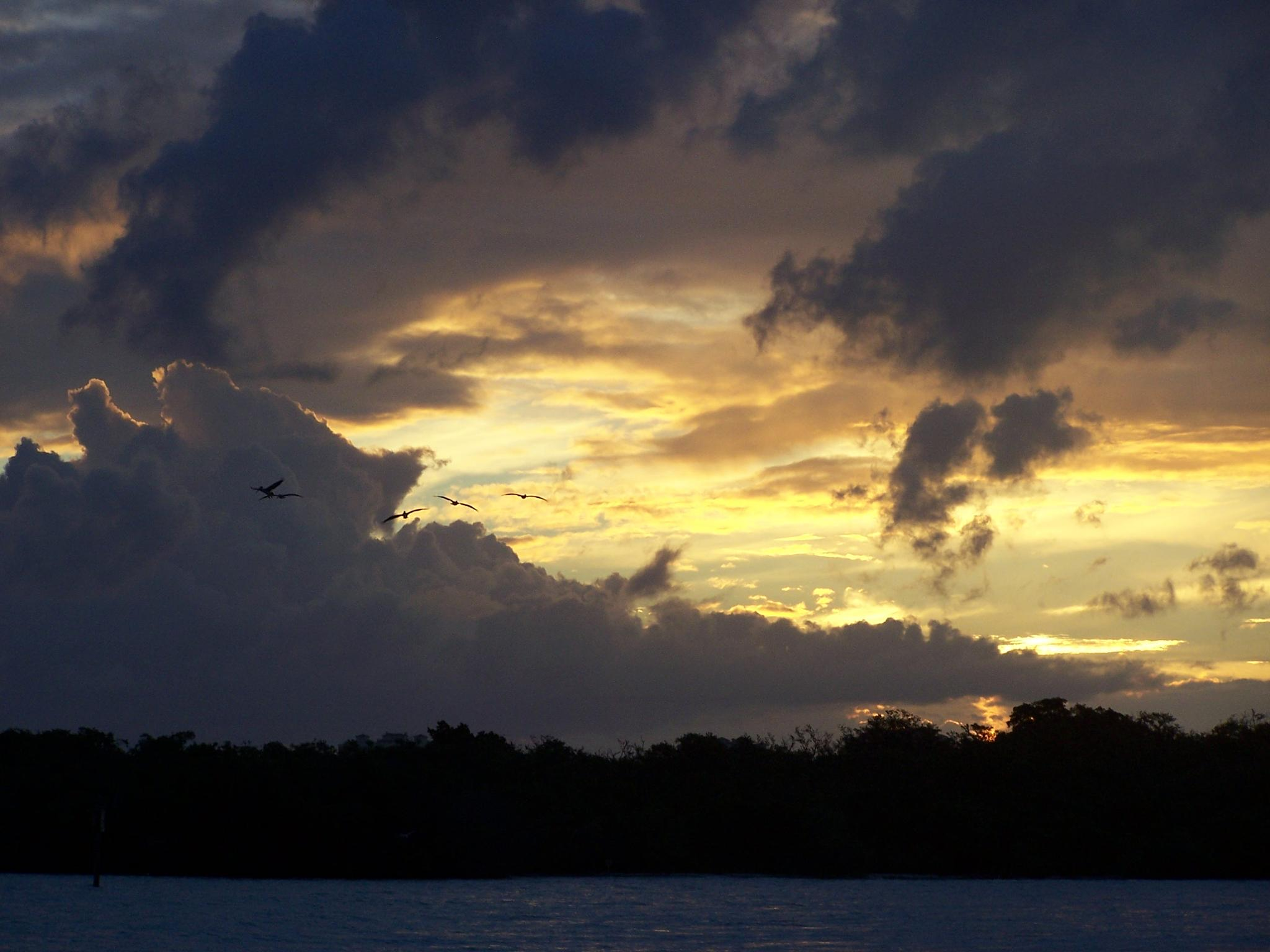 Sunrise Gliders by Todd