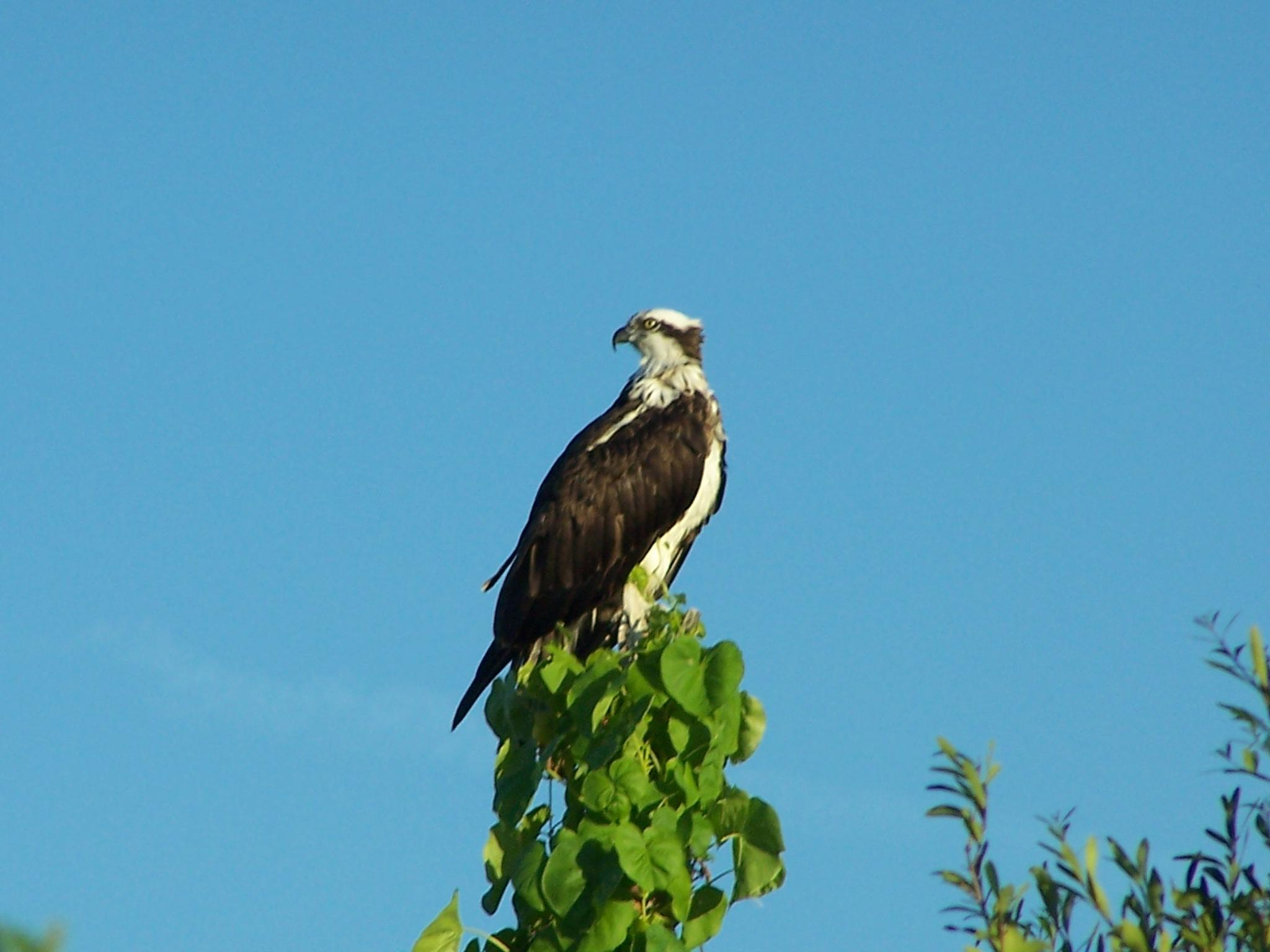 Favorite Perch by Todd
