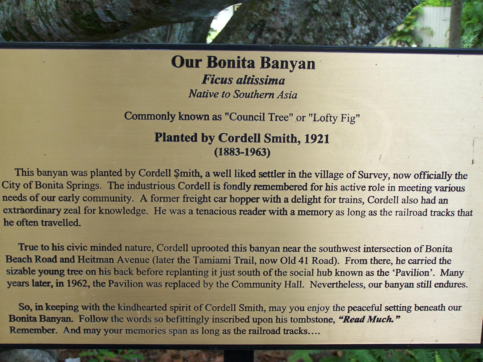 Old Banyan 2 by Todd