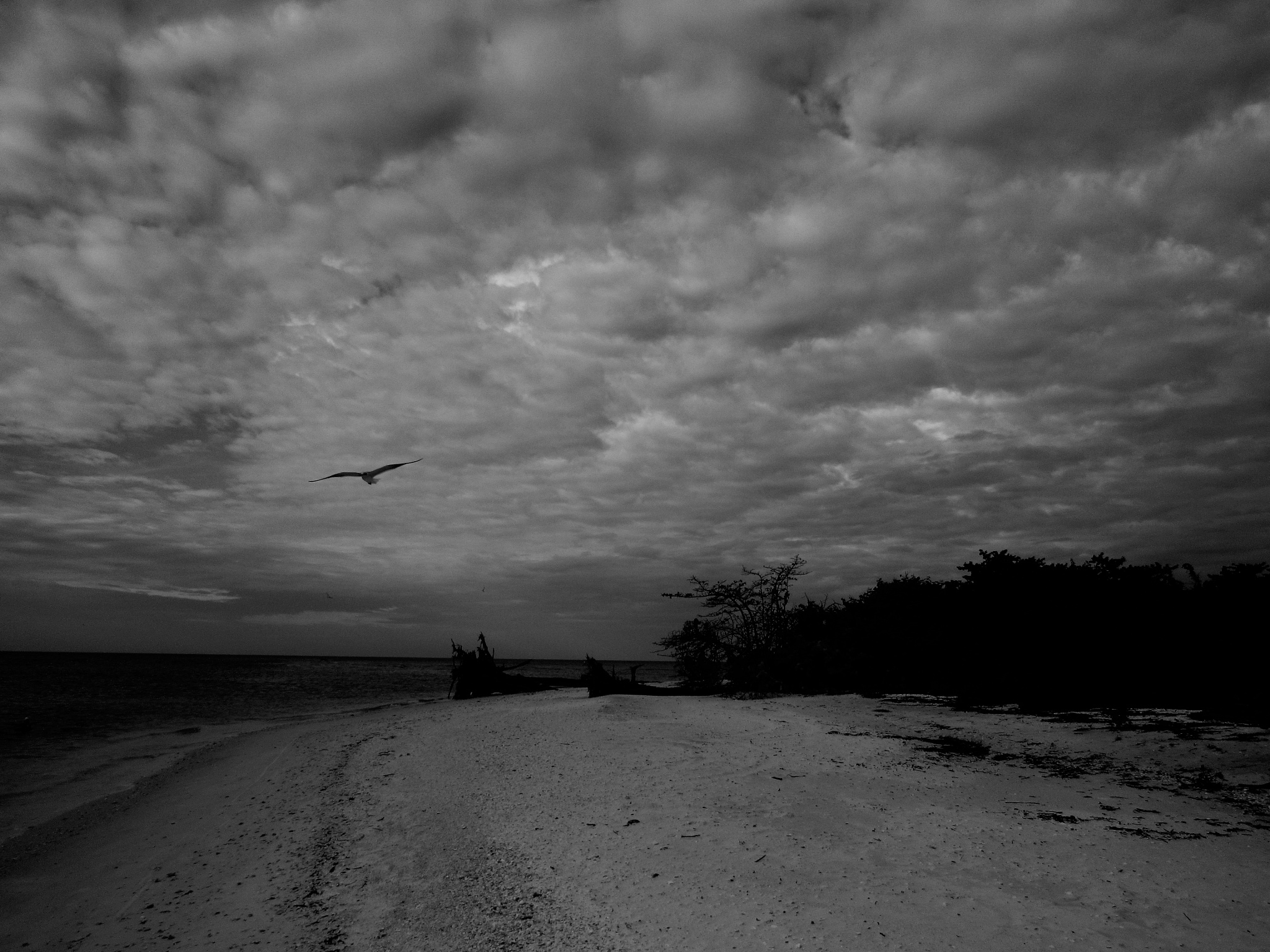 Monochrome Seagull by Todd