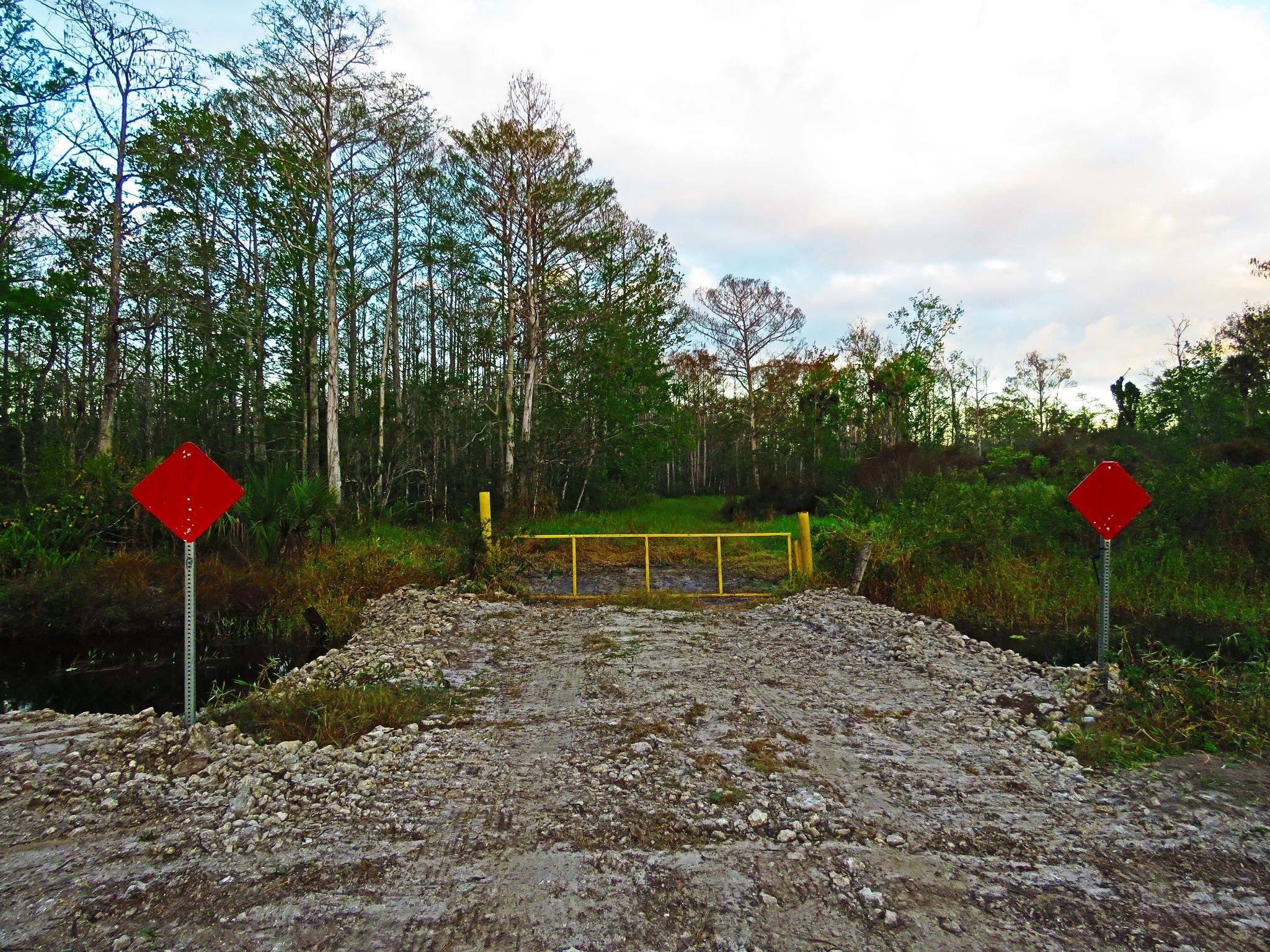Photo in Nature #trail #dangerous #hiking #quest #c.r.e.w. #flint-penn strand #bird rookery swamp #everglades #nature #florida