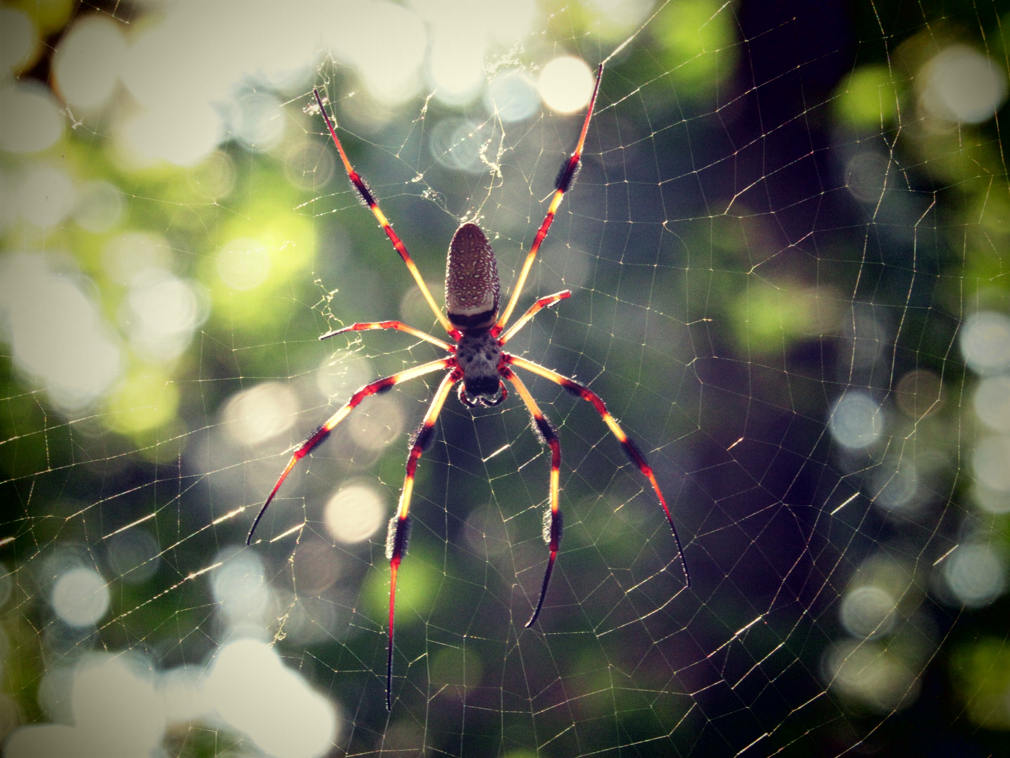 Big Spiders by Todd