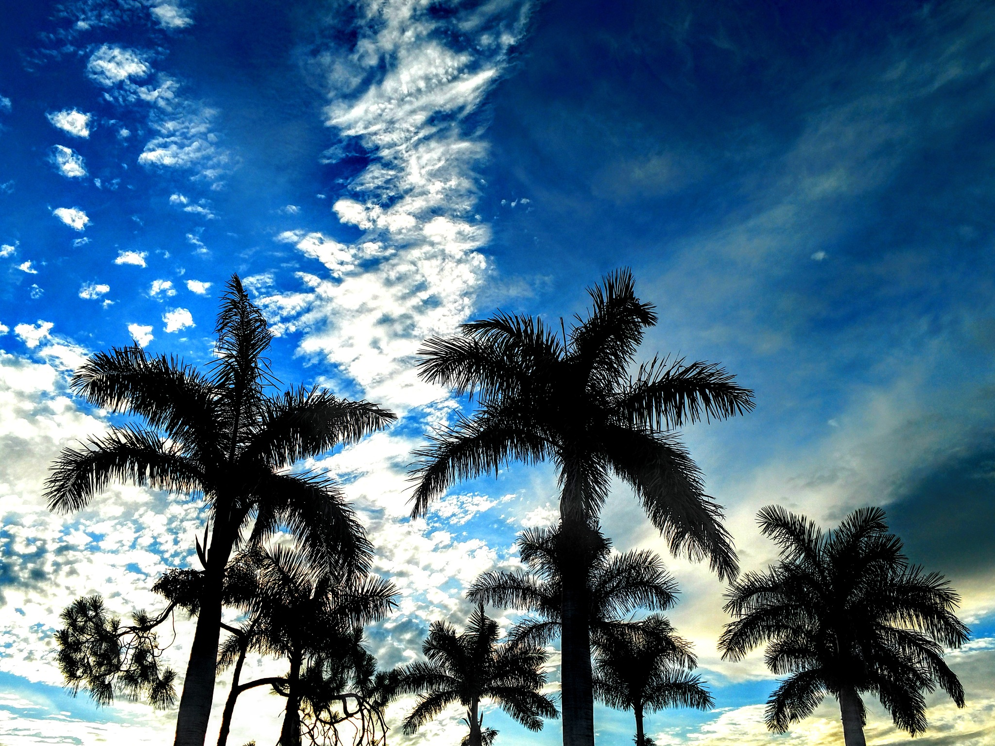 Subtropical Sky by Todd