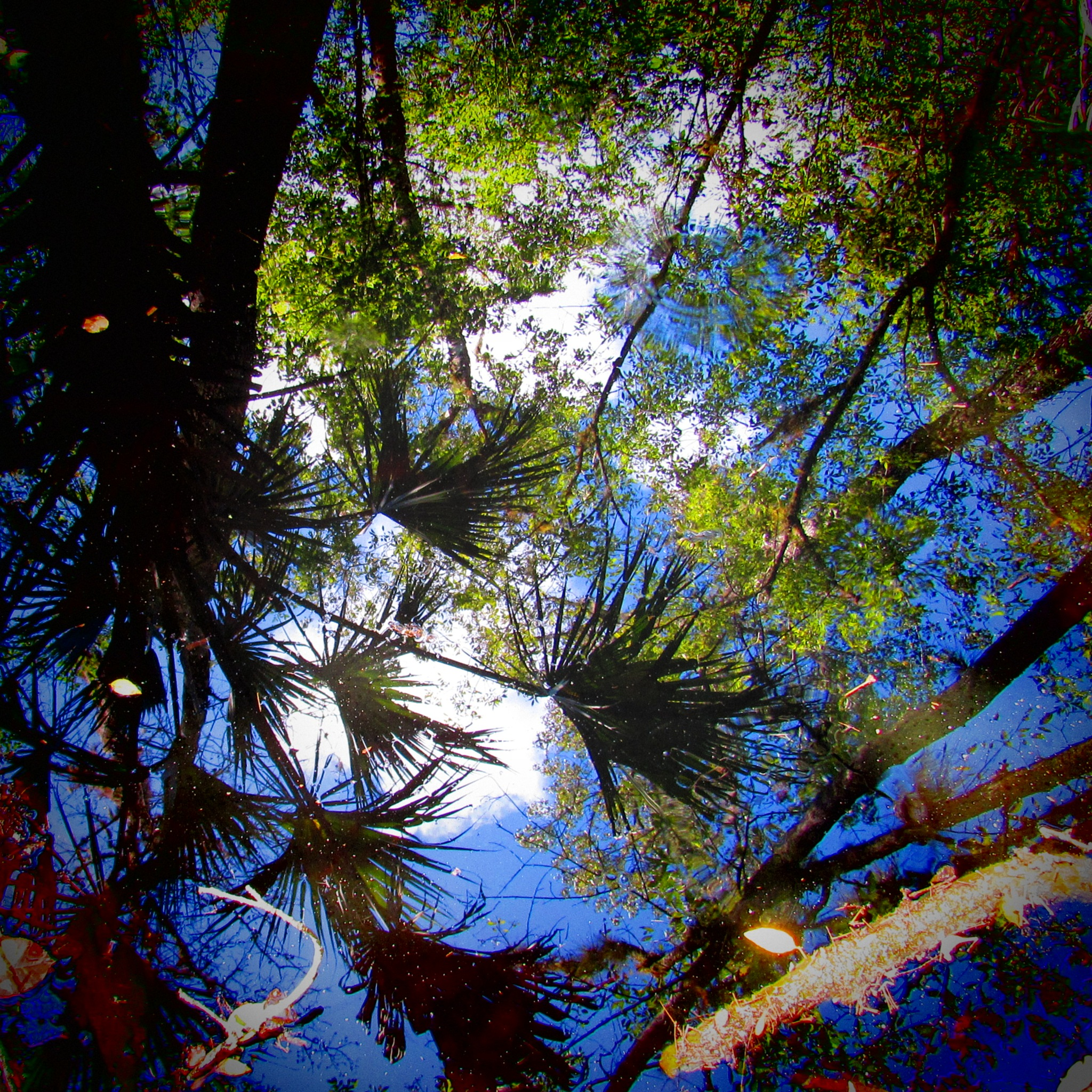 Reflections of the Swamp by Todd