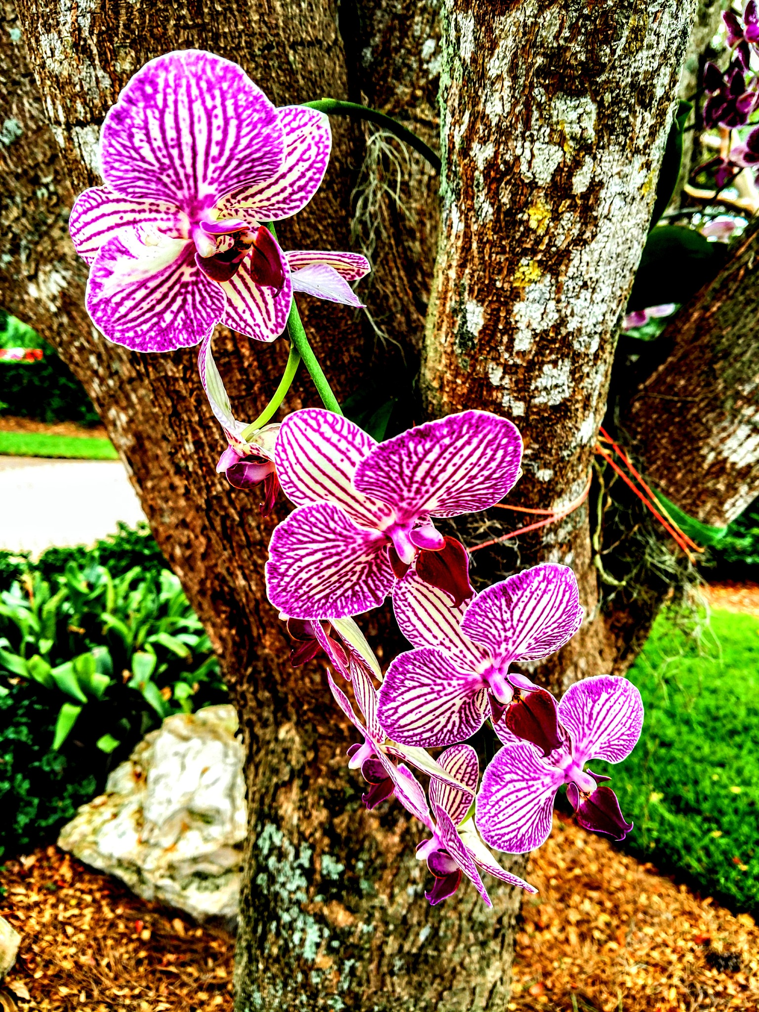 Orchid Season by Todd