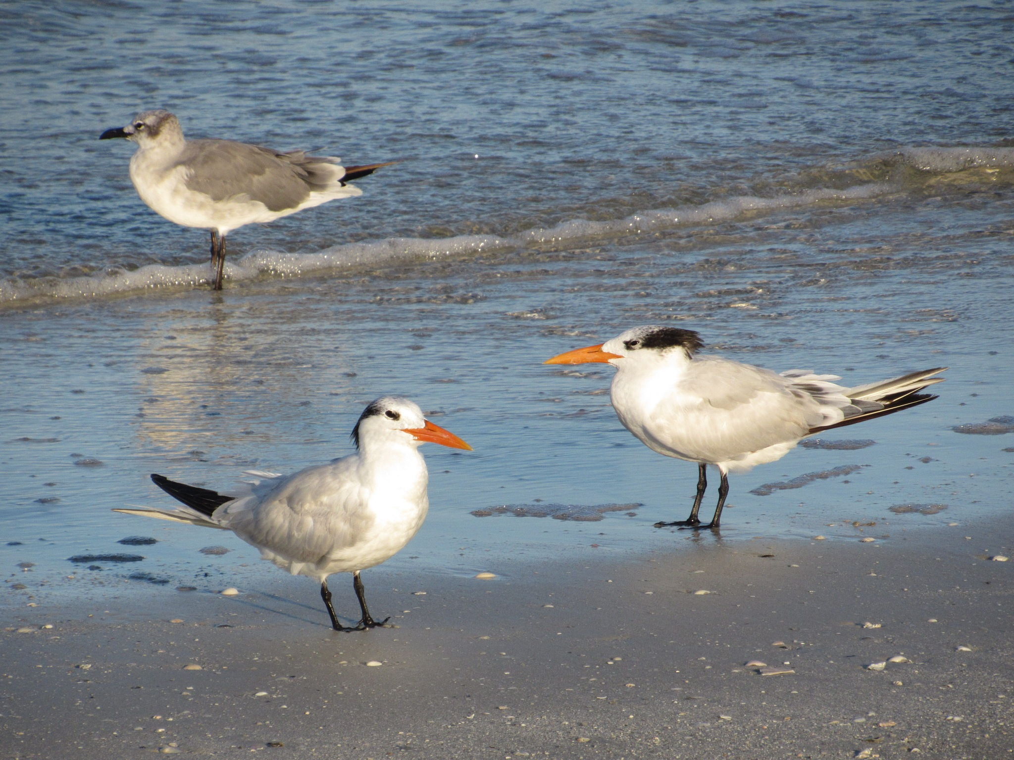 Tern Style by Todd