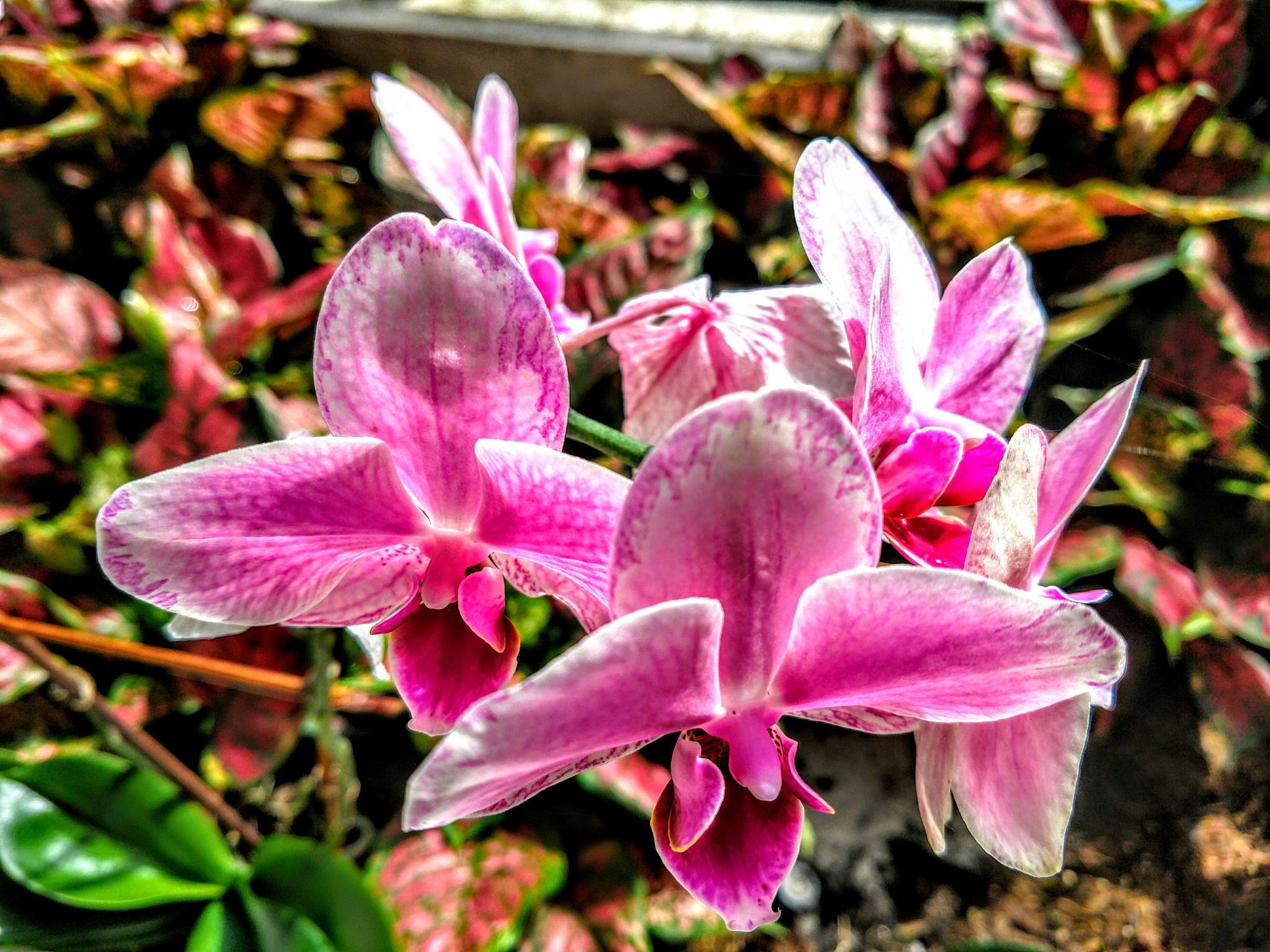 Orchids Are Like Candy by Todd