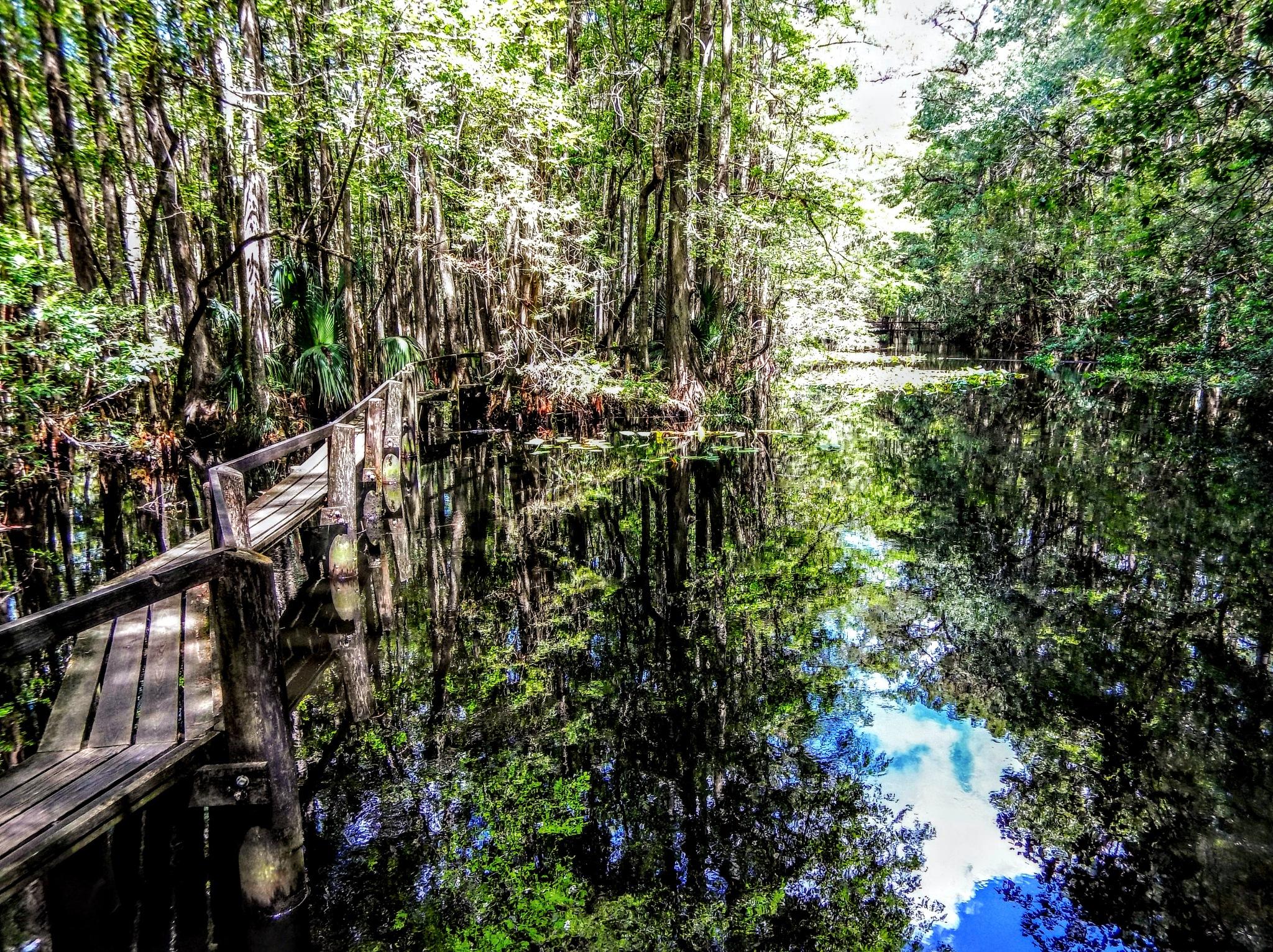 Swamp Dreams by Todd