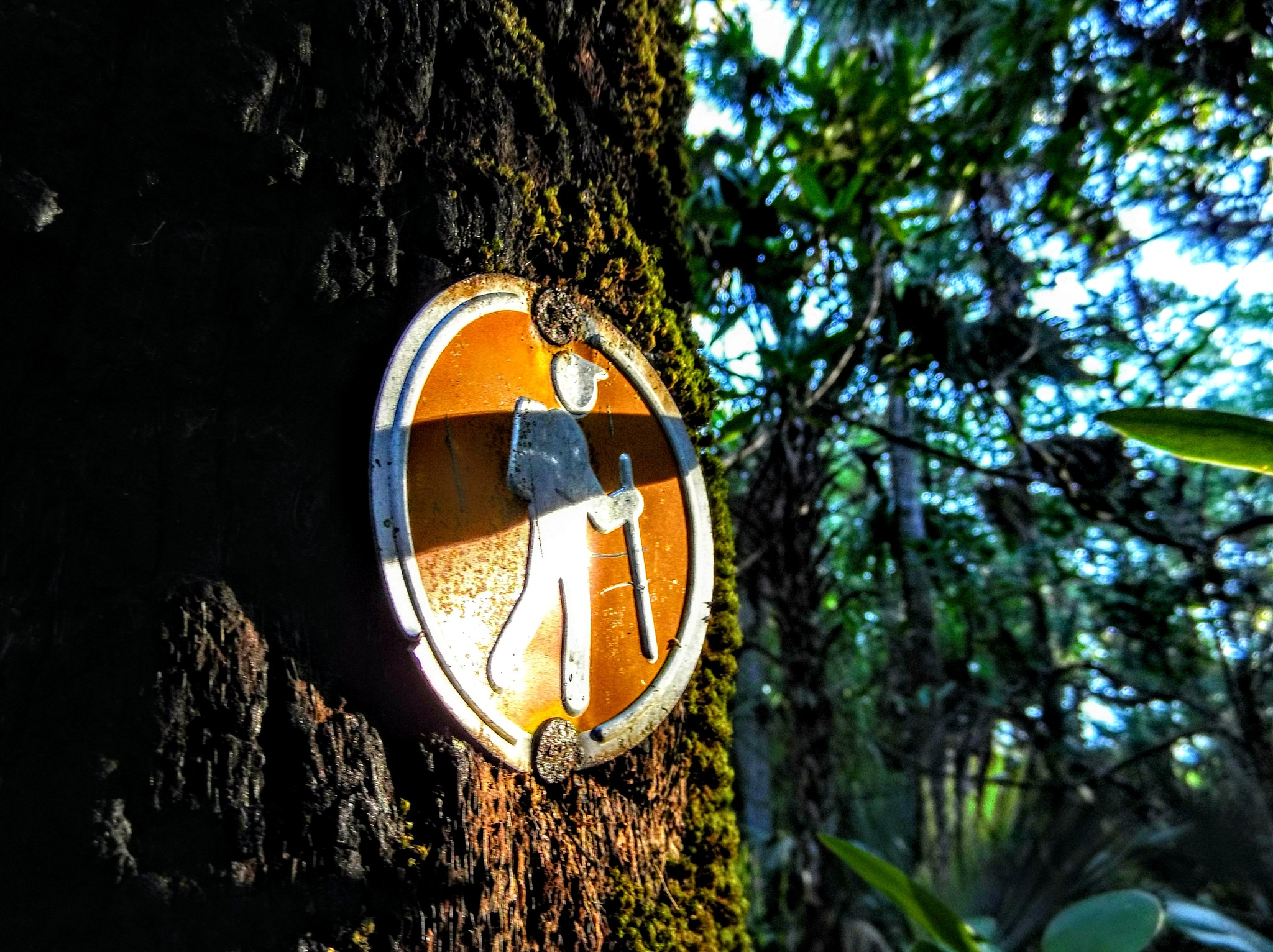 Trail Marker by Todd