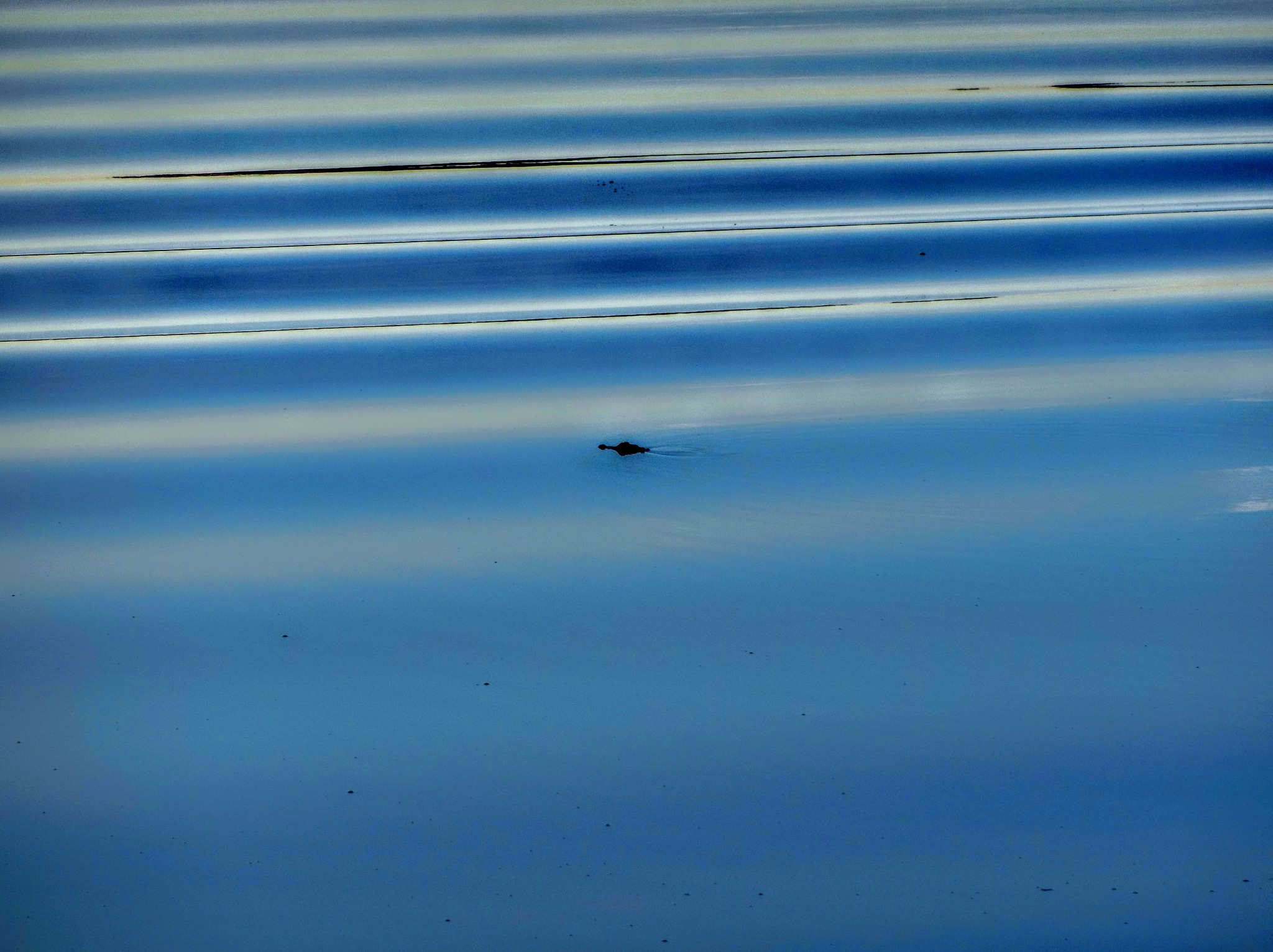 Gator Waves by Todd