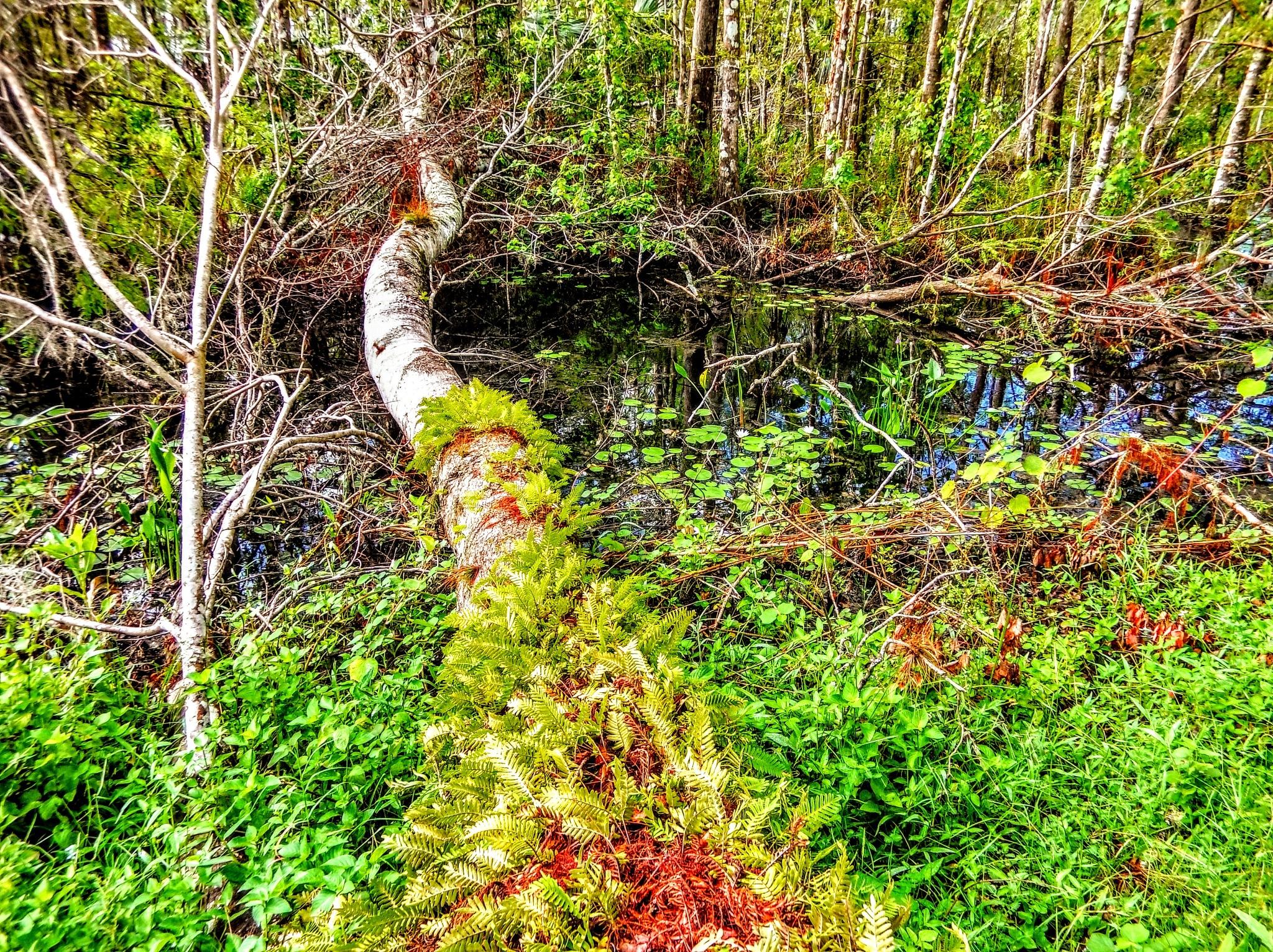 Fallen Ferns by Todd
