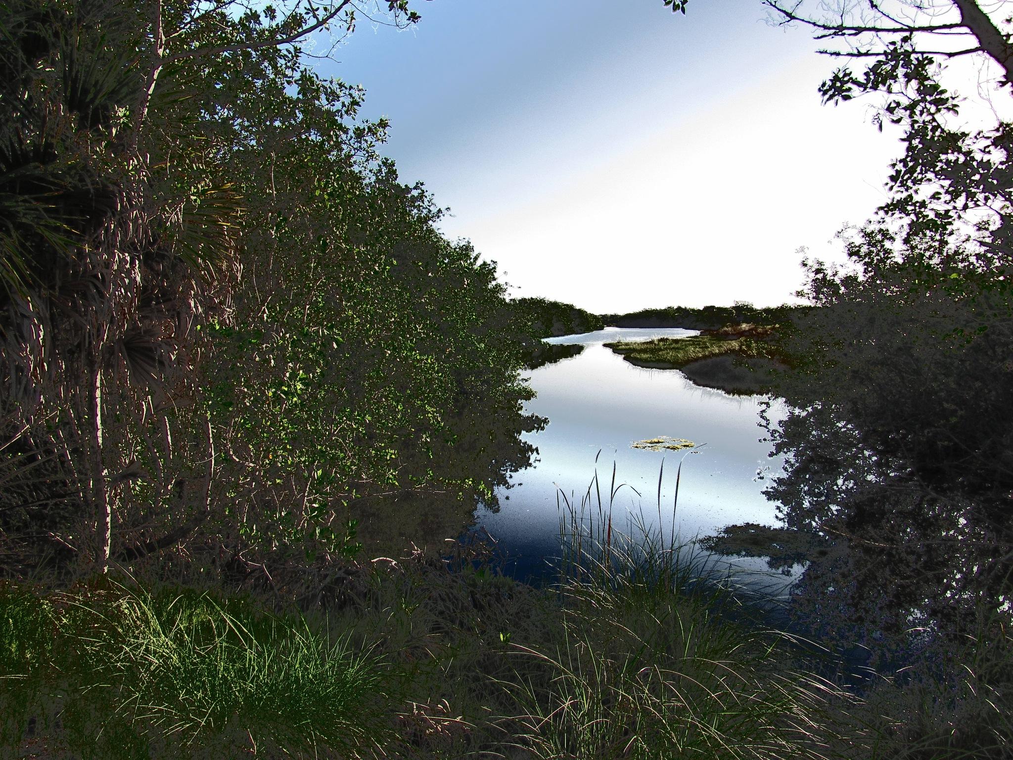 Mangrove Head Pond by Todd