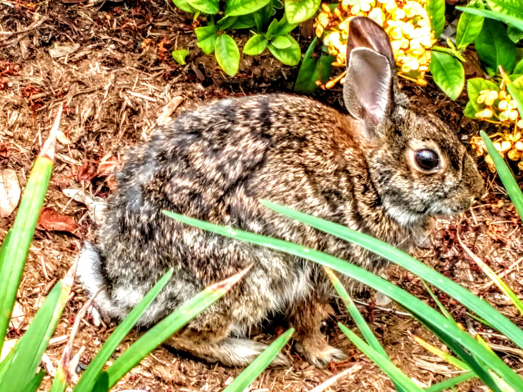 What's Up Doc ? by Todd