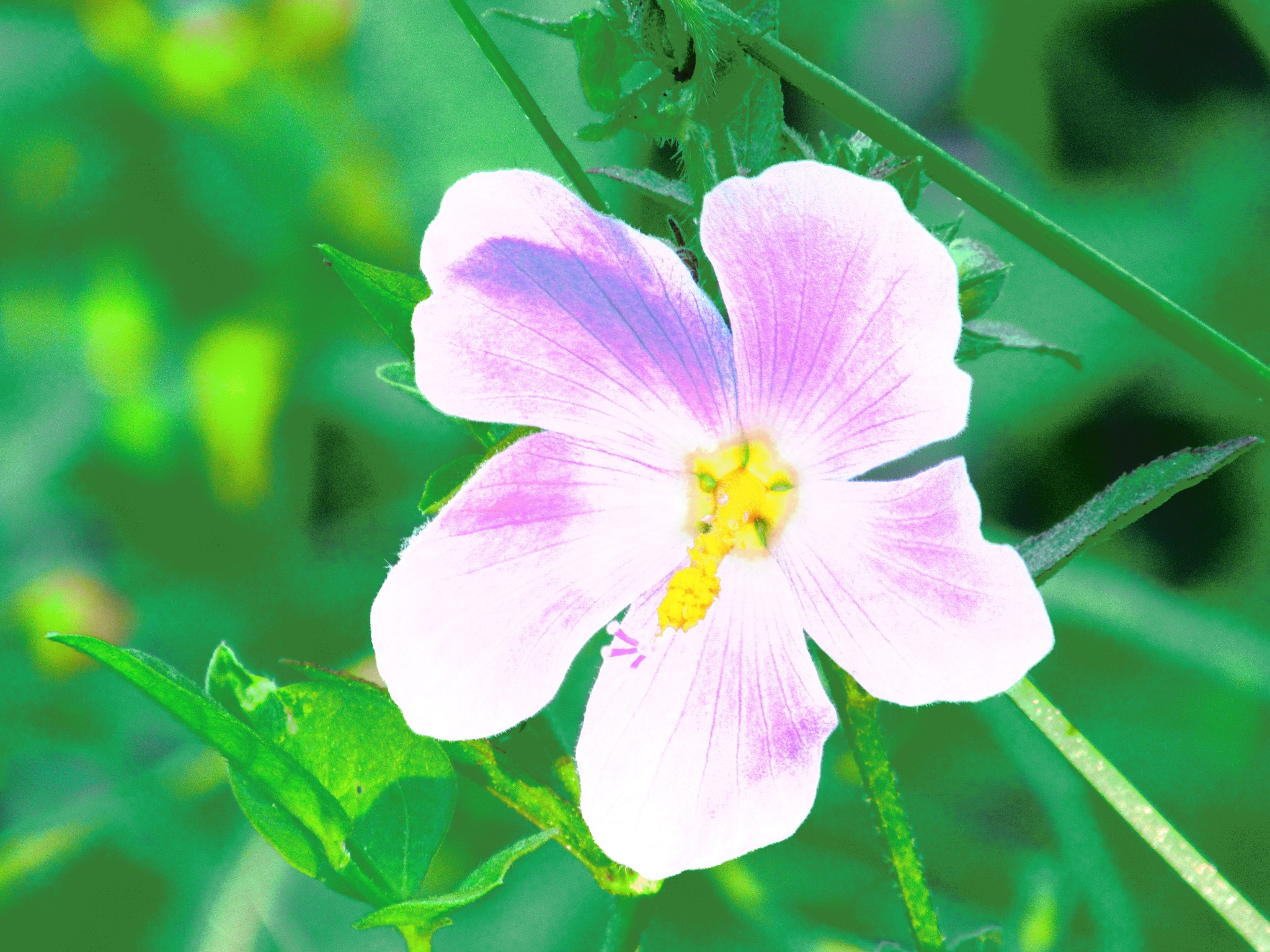 Marsh Mallow Surprise by Todd