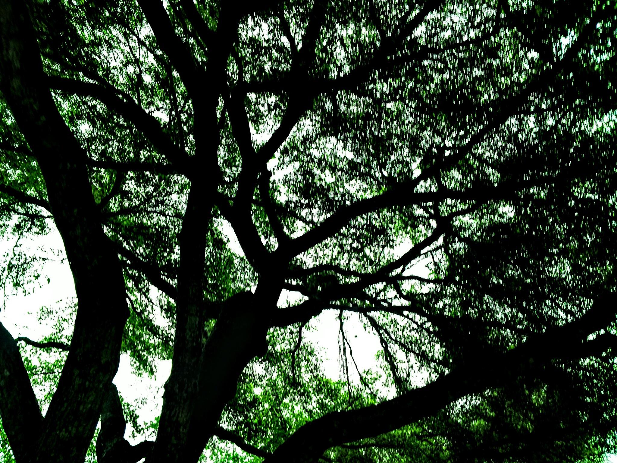 Inside An Oak by Todd