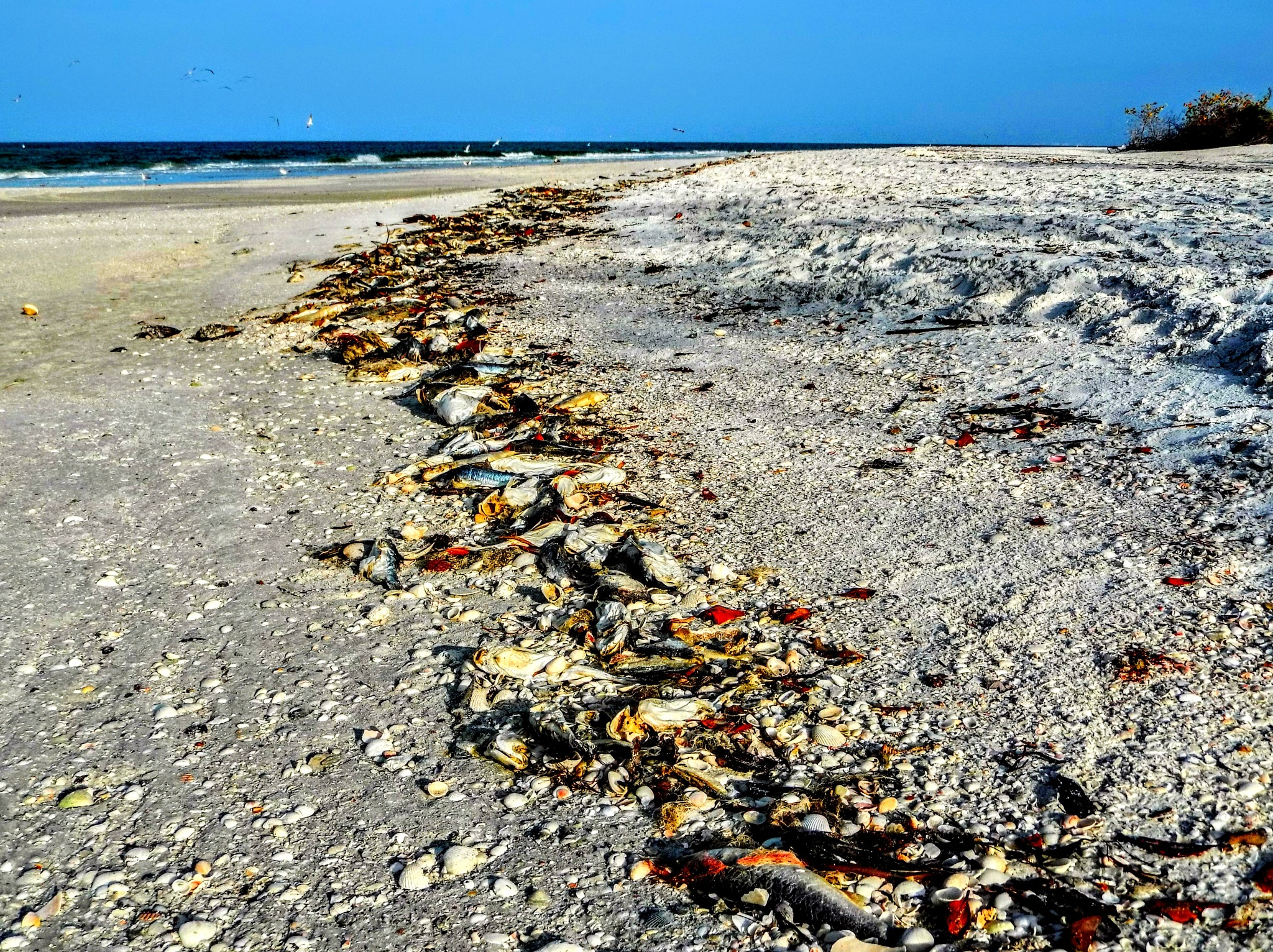 The Red Tide by Todd