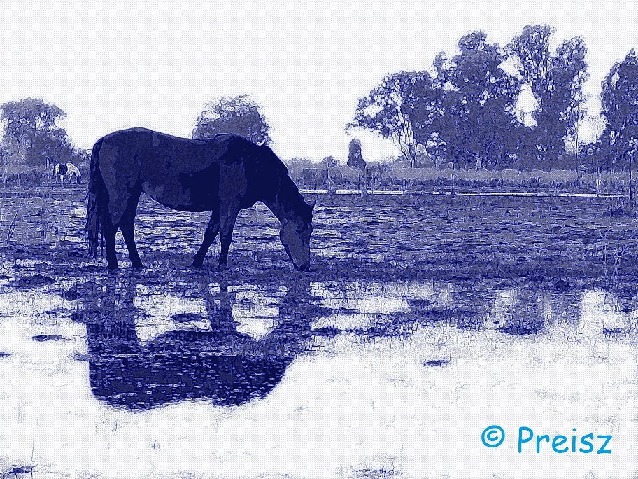 REFLEJOS AZULES. by carlososcar.preisz
