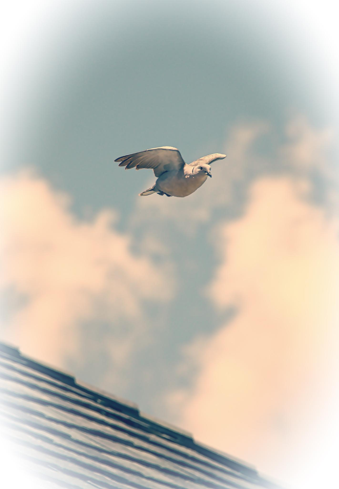 Heavenly Dove in Flight by William Pittman
