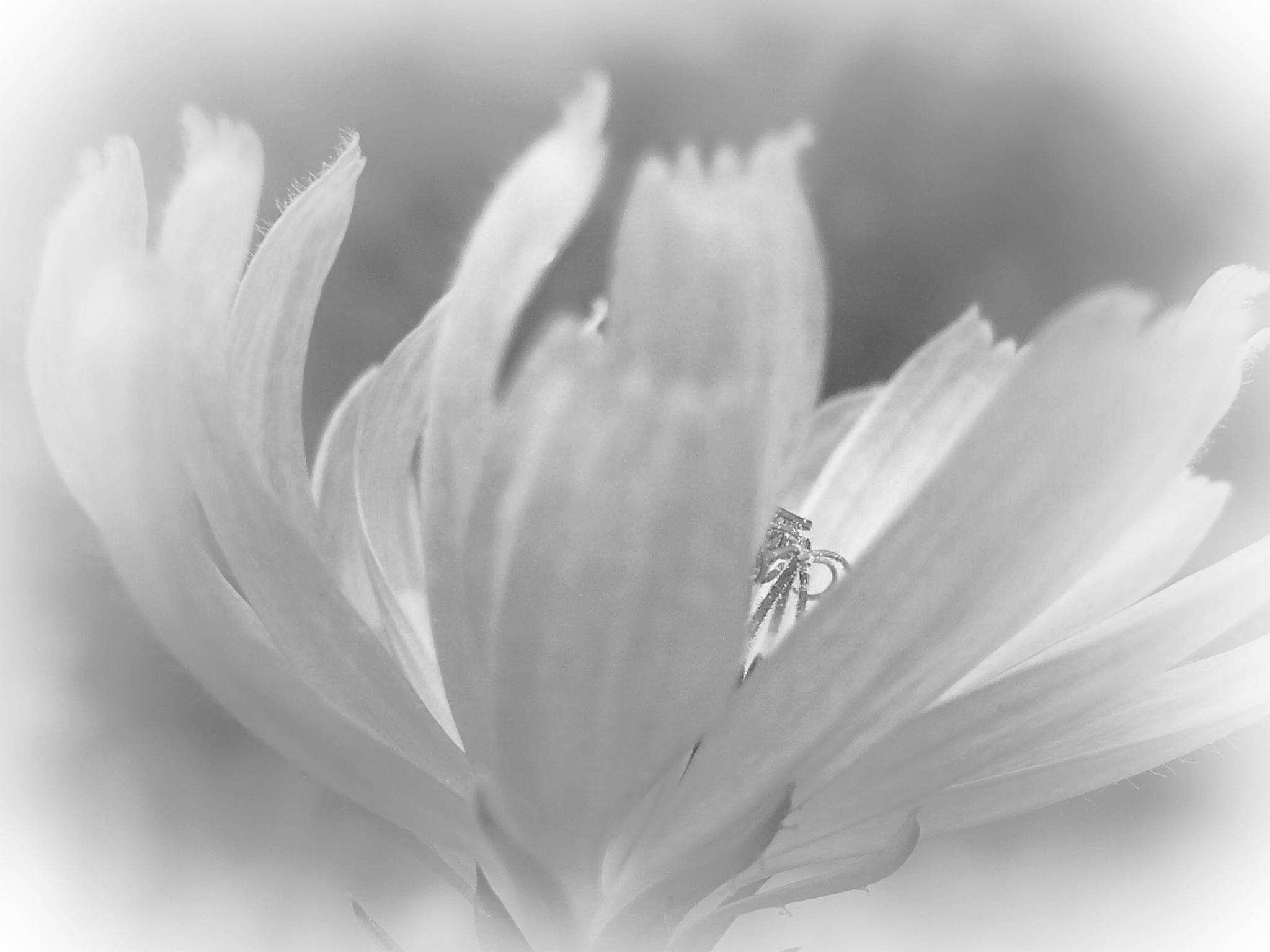 Grey Dawn 1 by dmickler