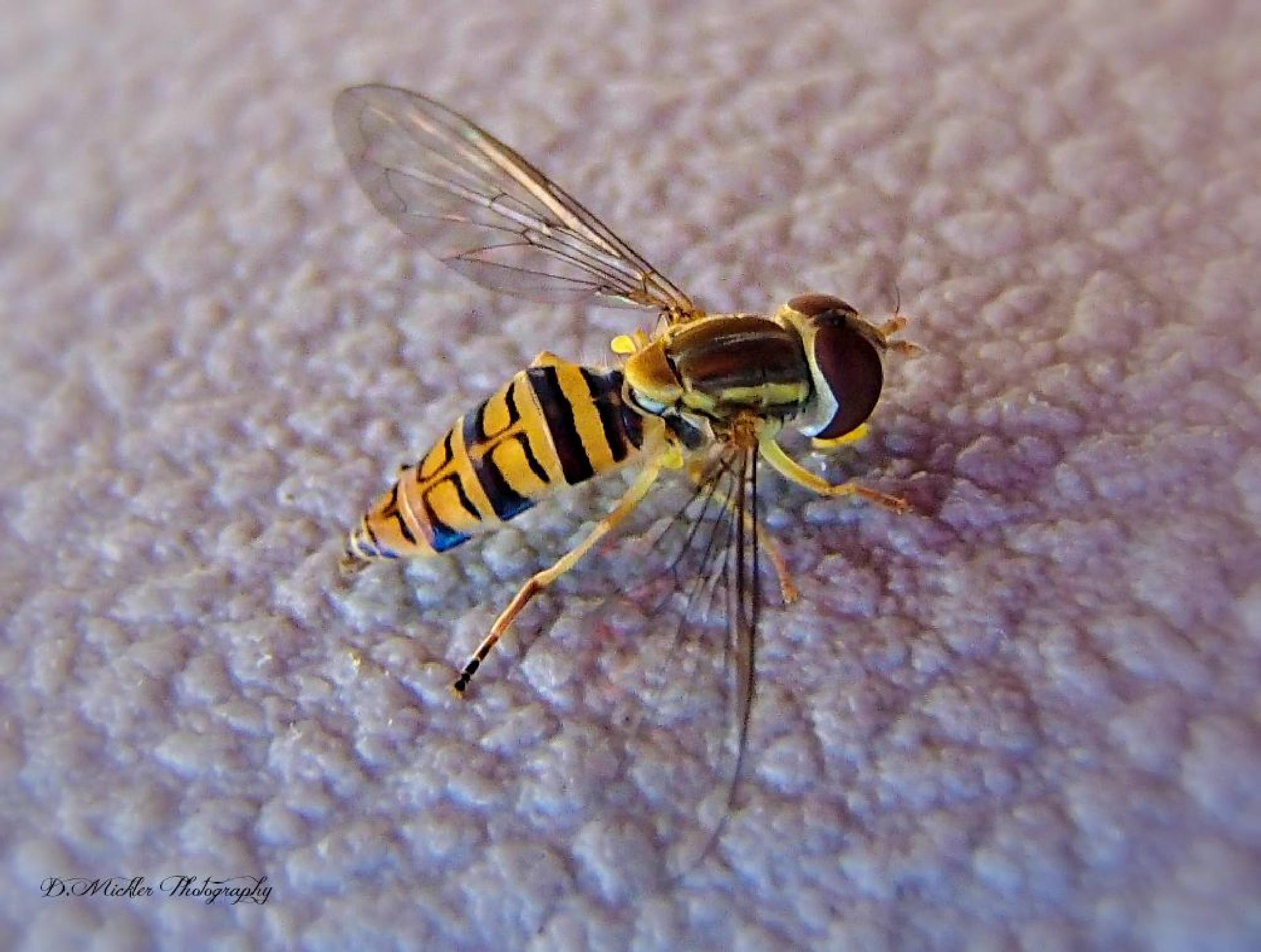 Sweat Bee 1 by dmickler