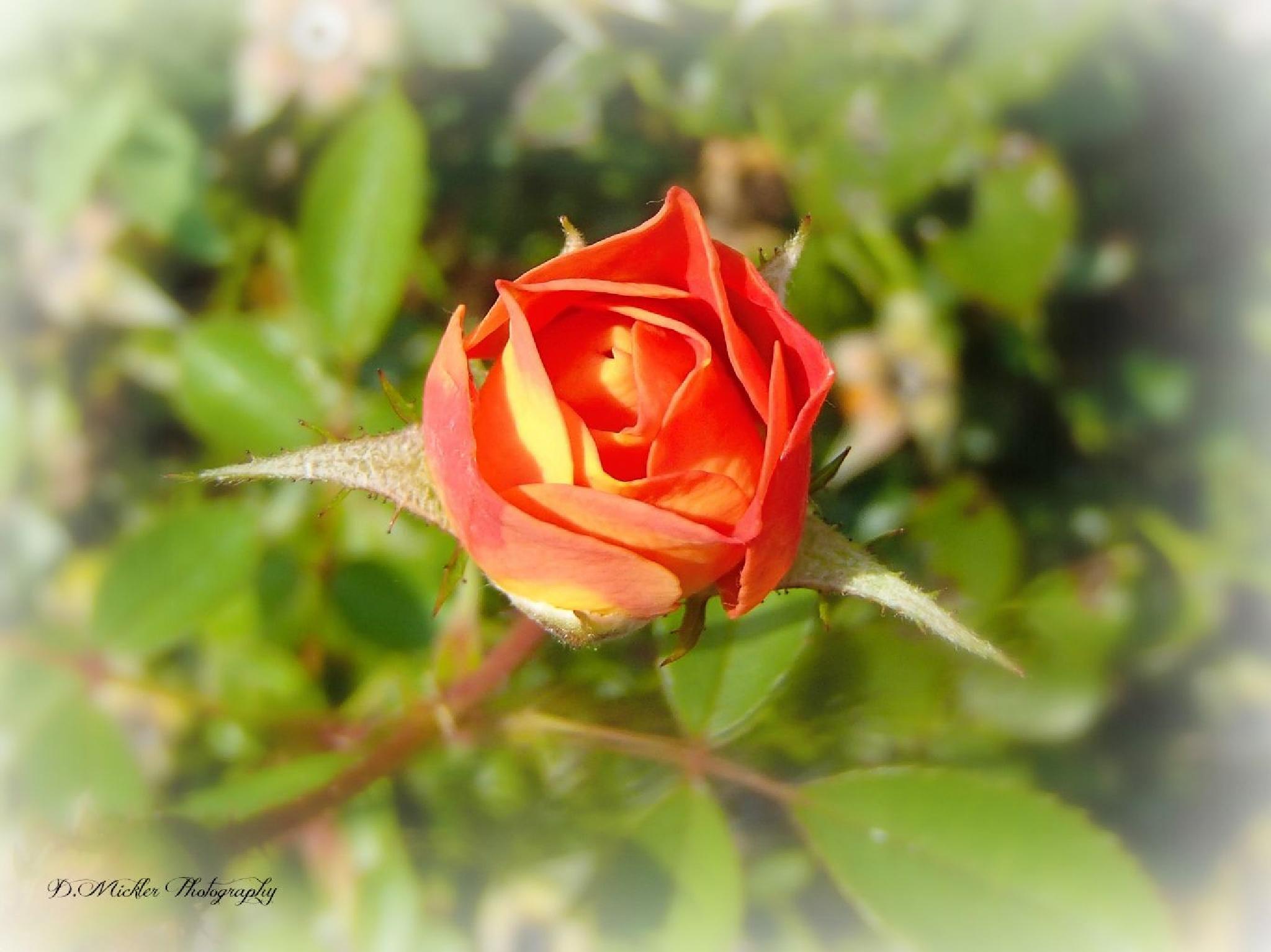 In The Garden by dmickler