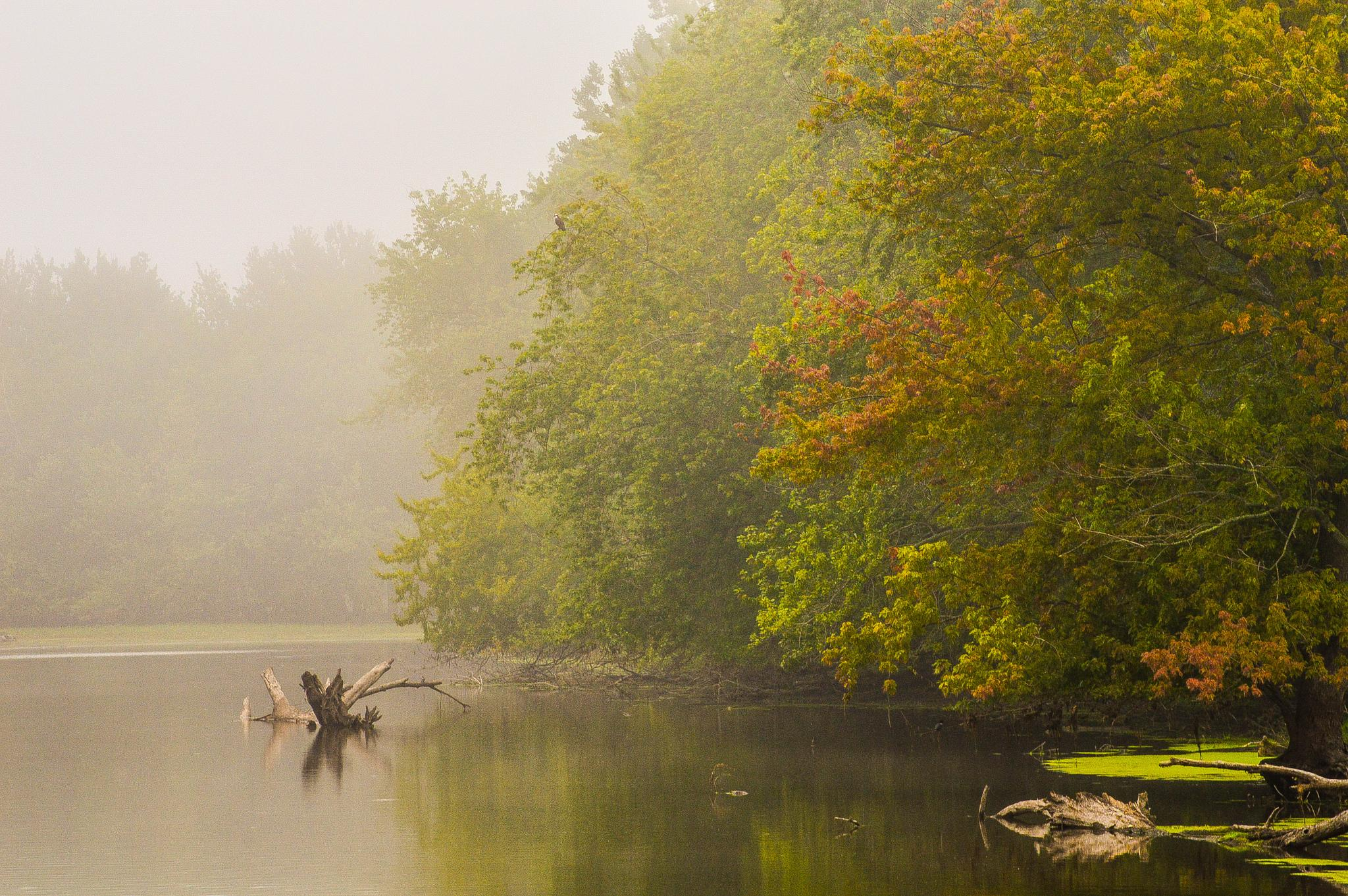 foggy lake summer morning on the river by jason.lockhart.9