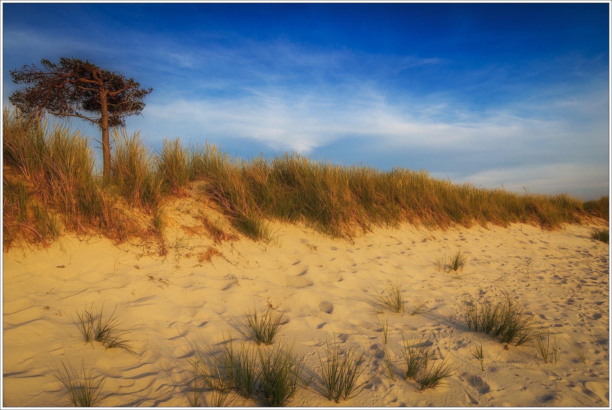 Golden light on the beach by Thomas Jahnke