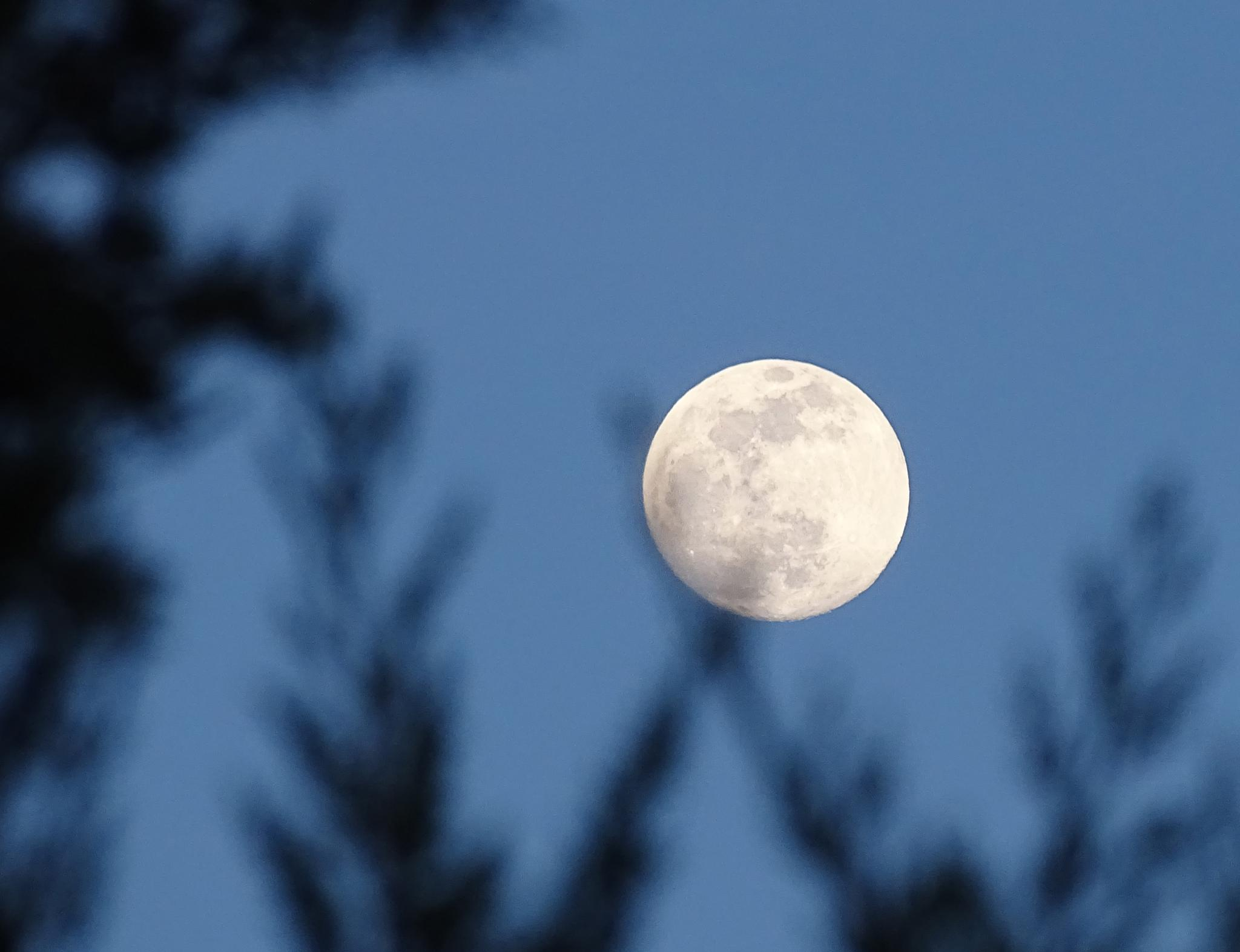 luna de mayo by lola.garciaayala