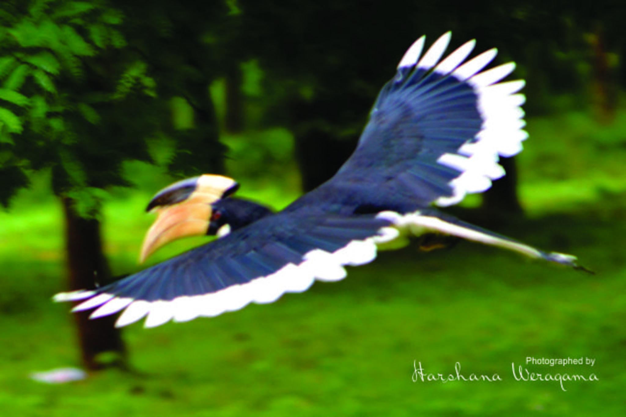 Take off by harshana.weragama