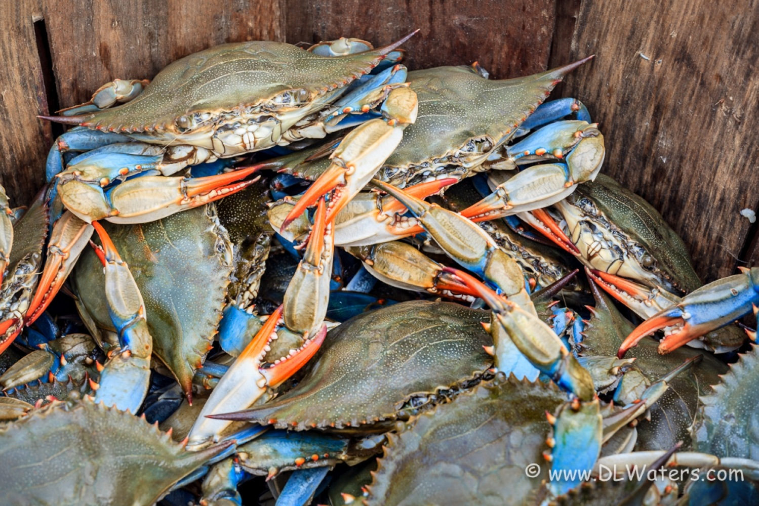 Blue Crabs by Scene in a different light