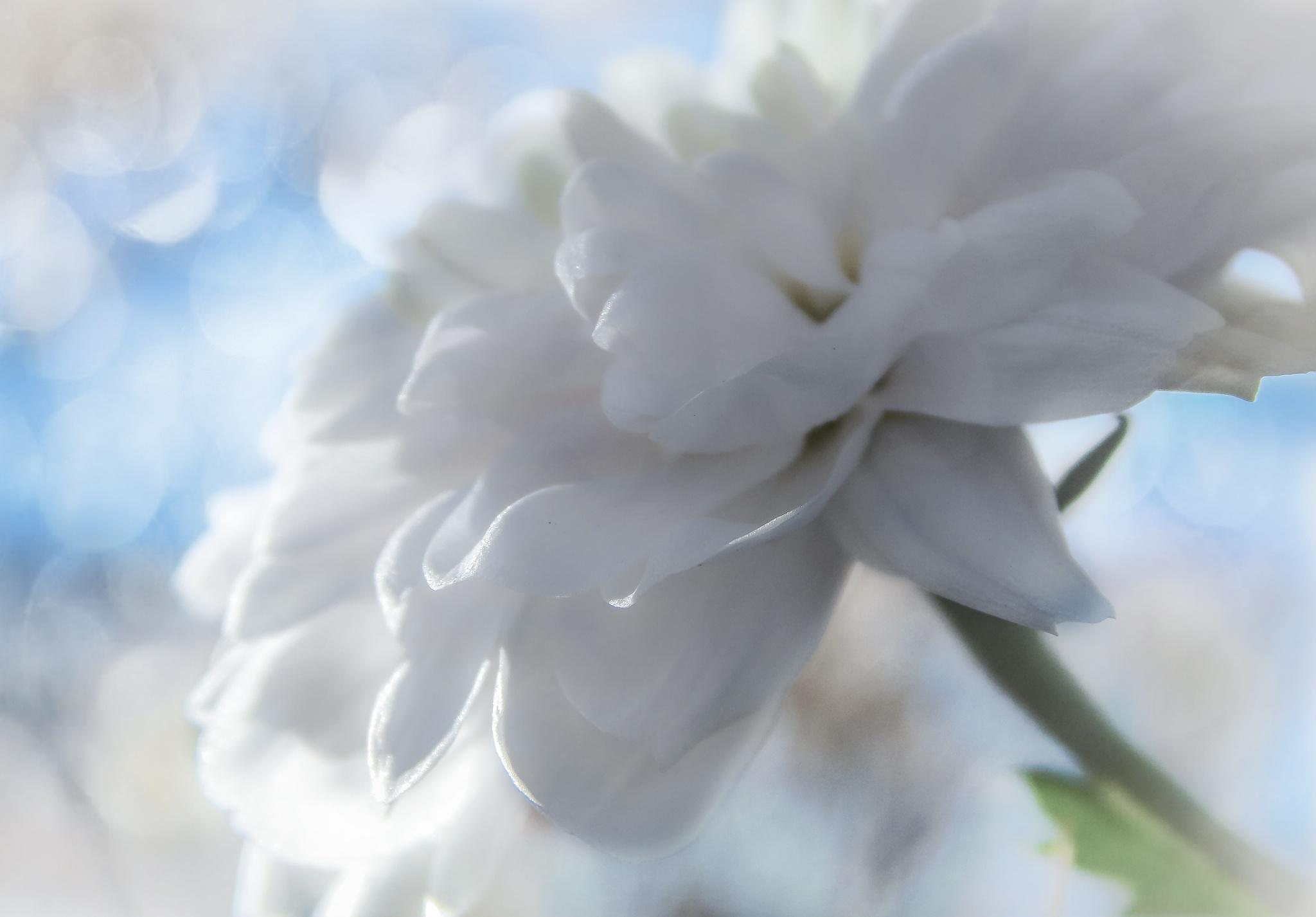 whiteness by Nikoletta Kolozs