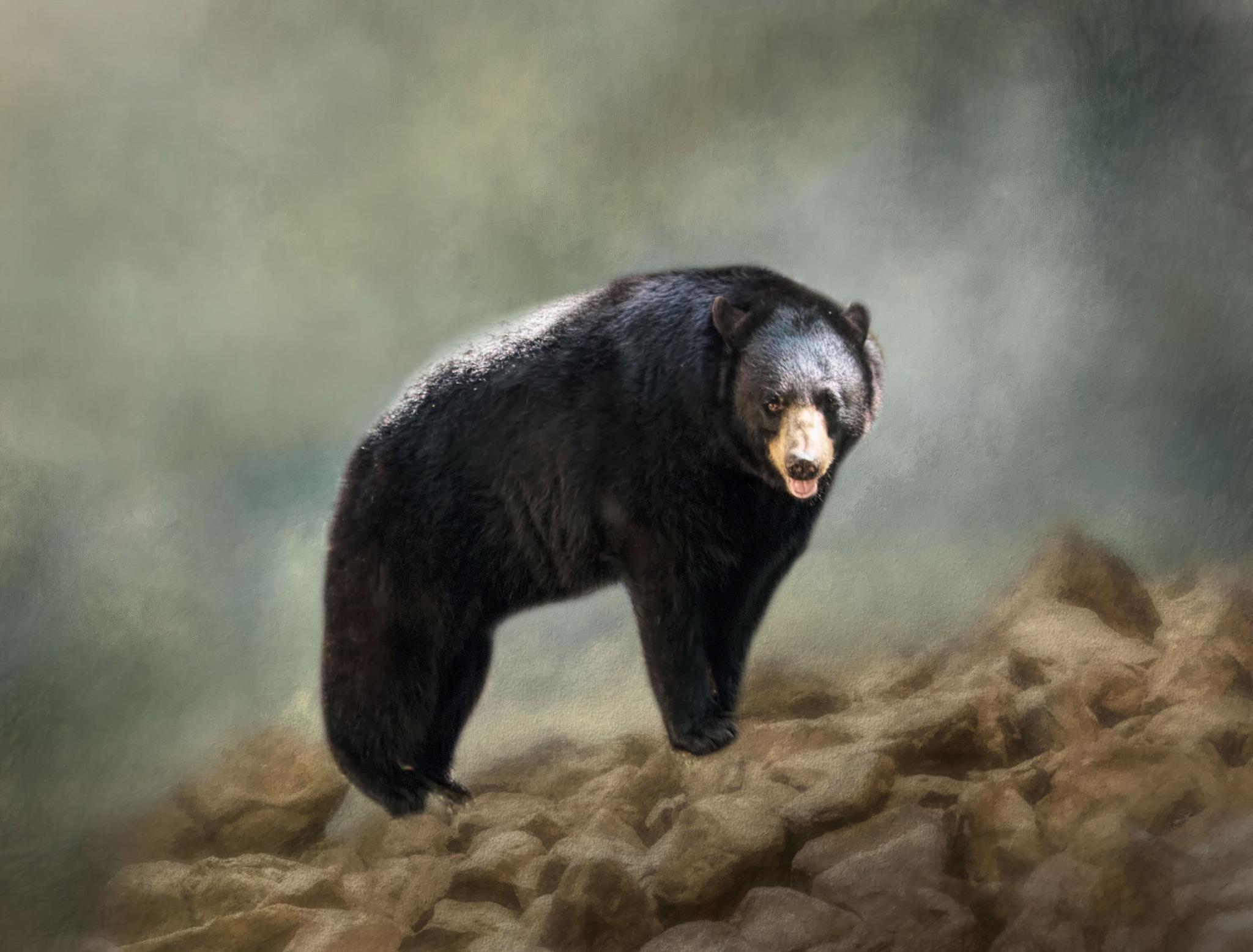 Bear by jammiejam