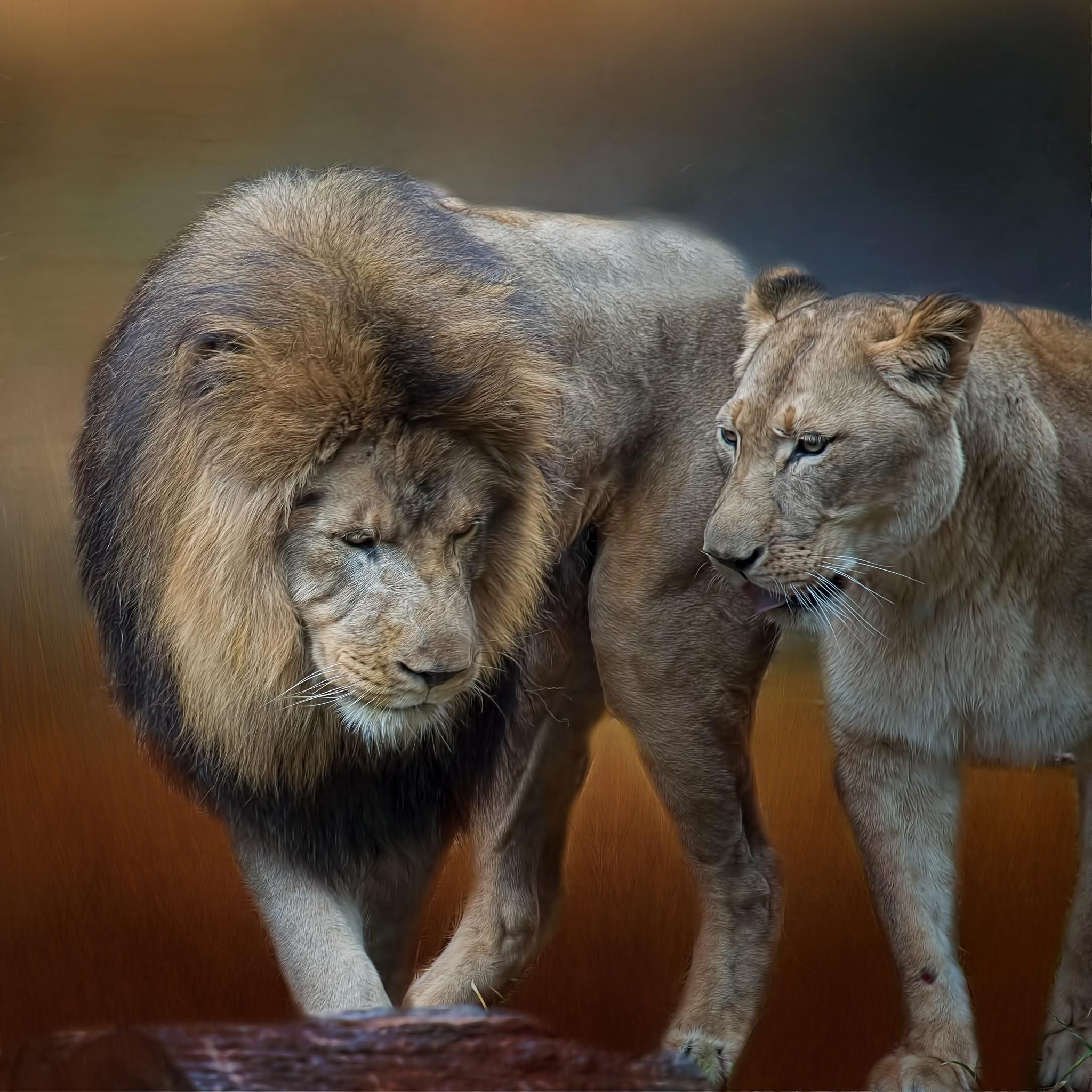 King & Queen by jammiejam
