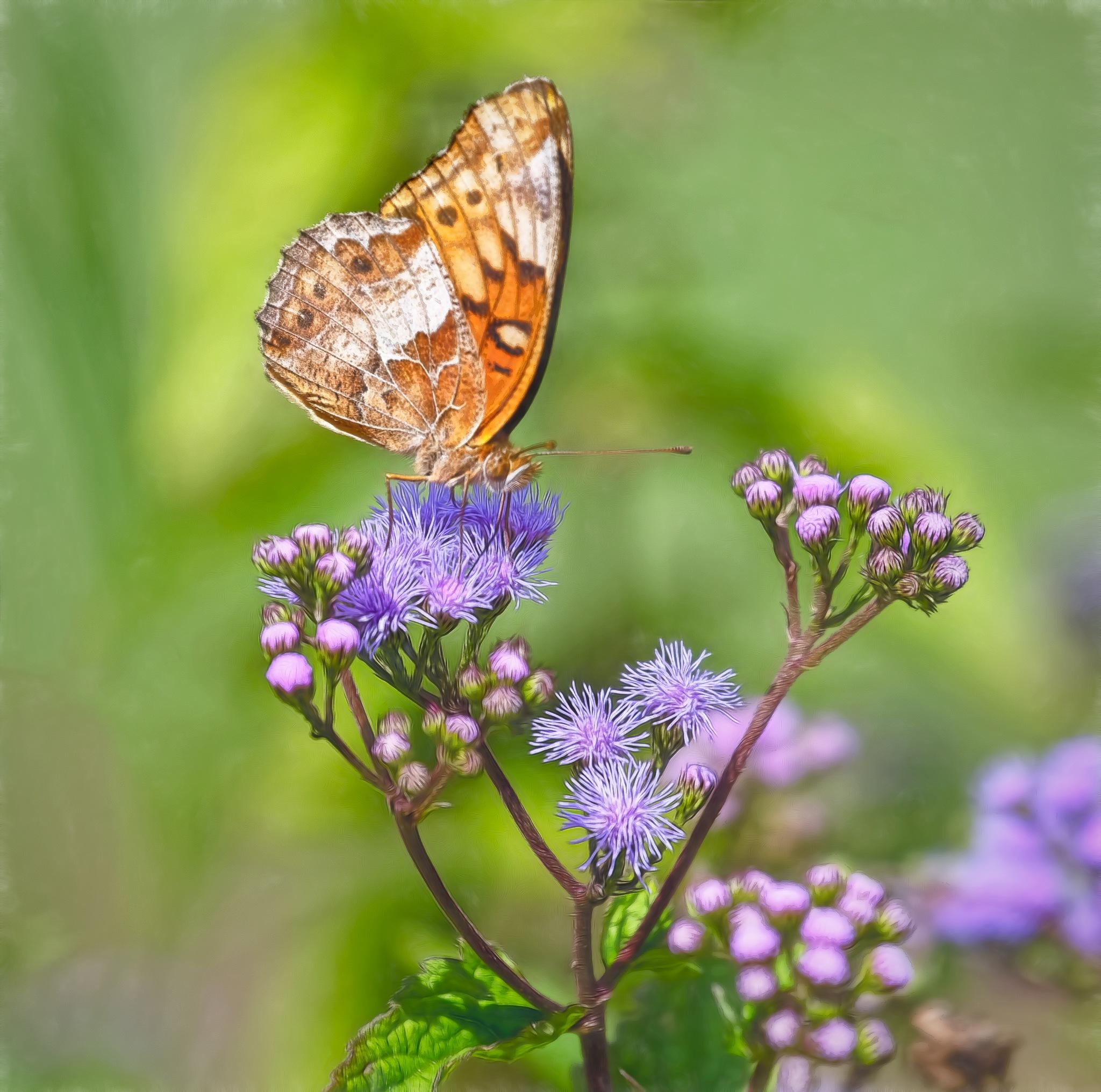 Butterfly by jammiejam