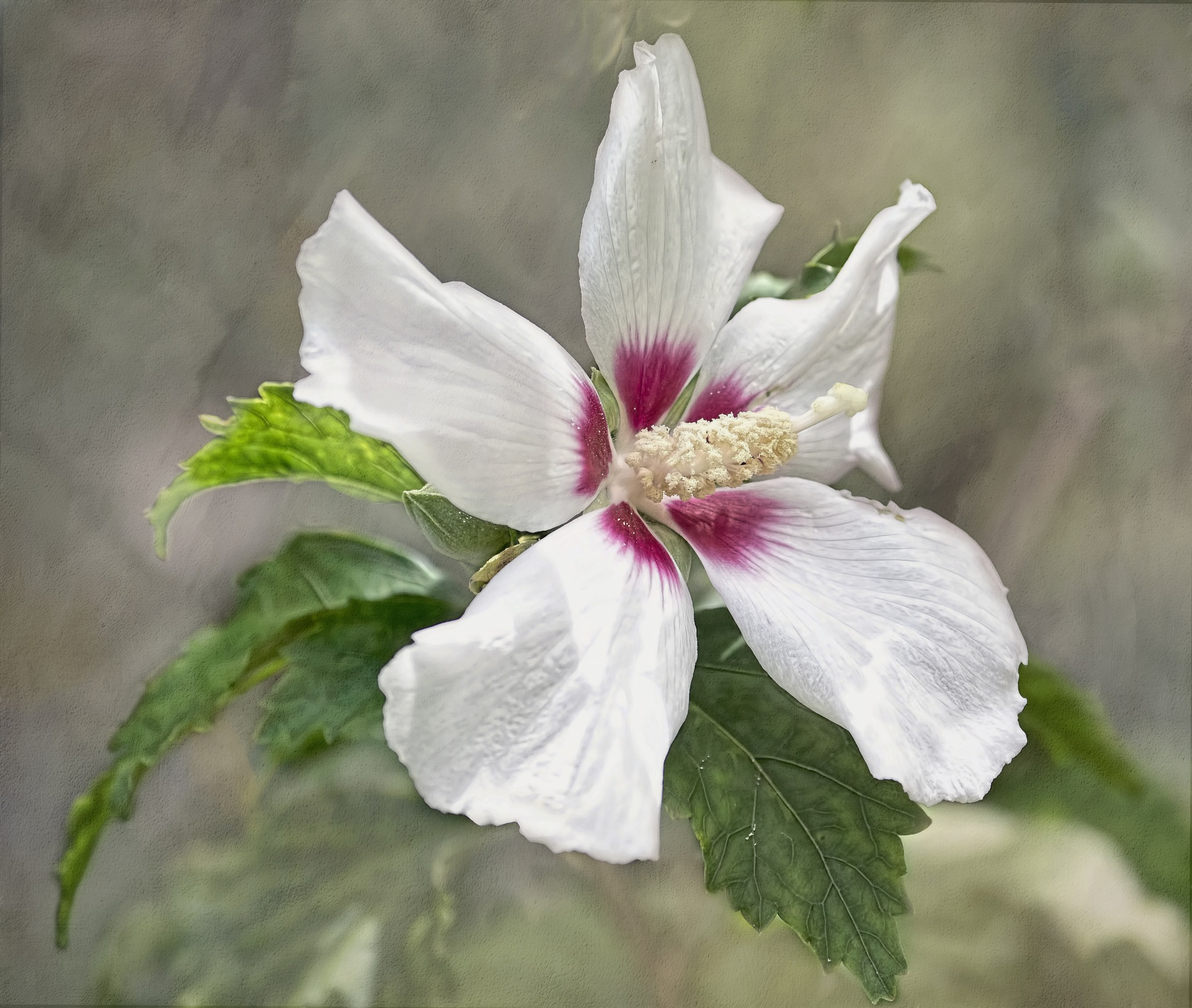 Hibiscus by jammiejam